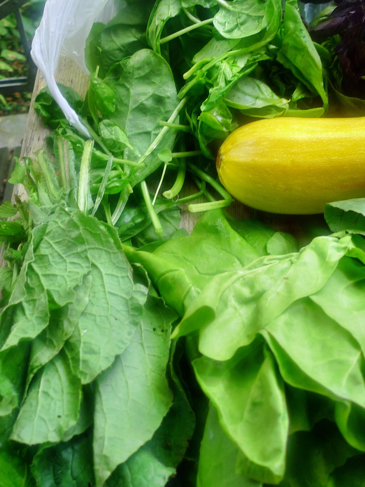 Gemüse vom Markt -22.8 (6)