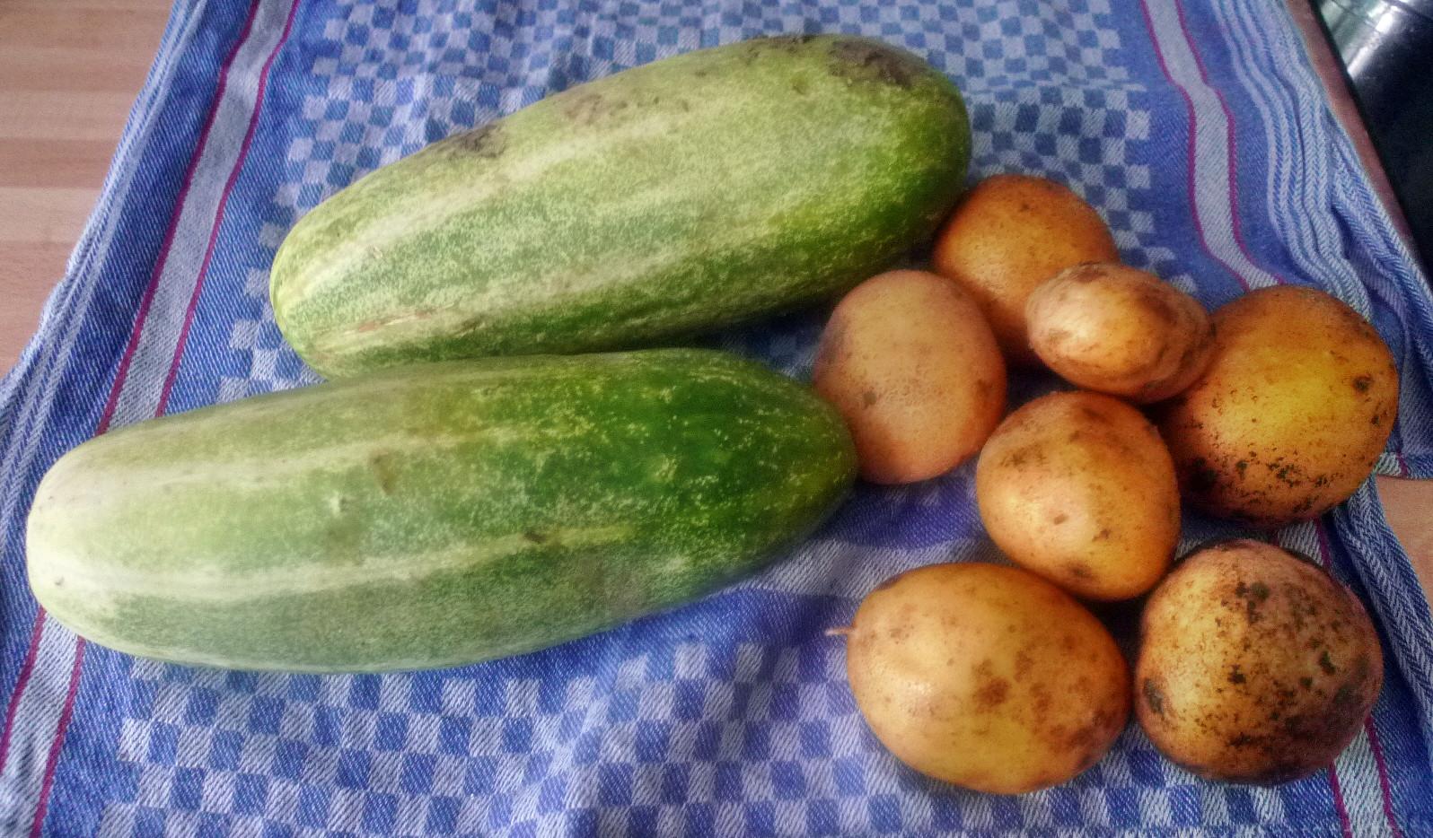 Gurkengemüse-Kartoffel-Mirabellenkompott-8.8.14   (1a)