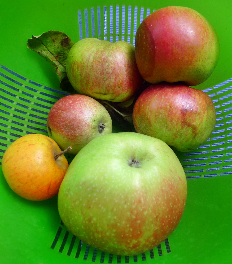 Obst-24.8.14   (3)