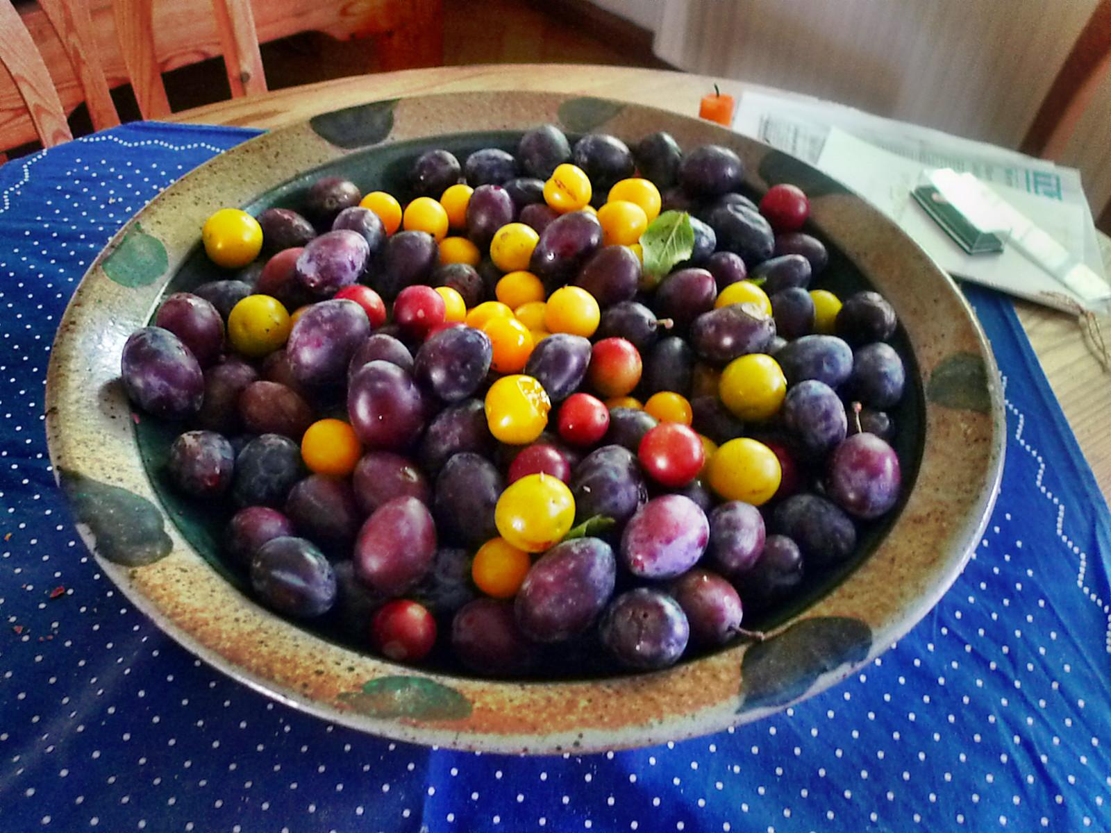 Obst aus Nermsdorf-6.8.14   (1)
