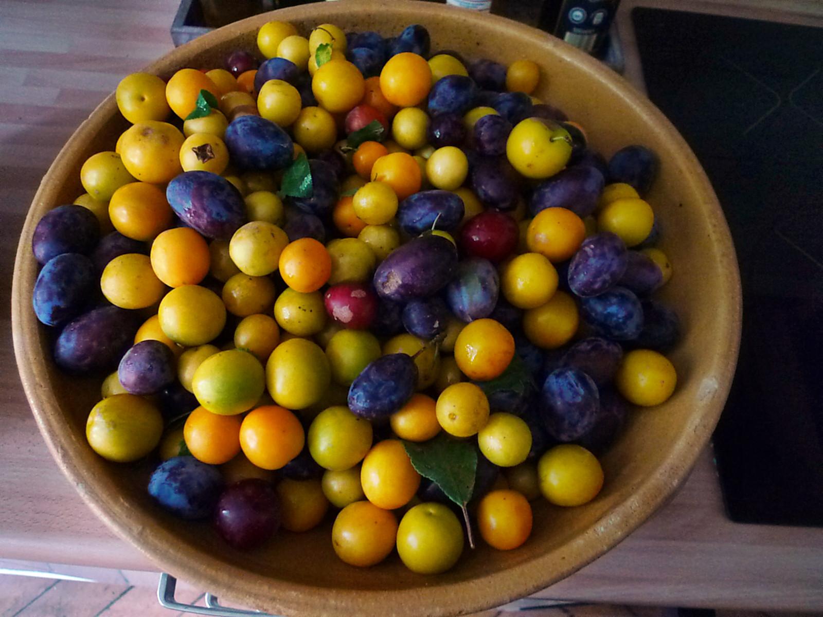 Obst aus Nermsdorf-6.8.14   (2)