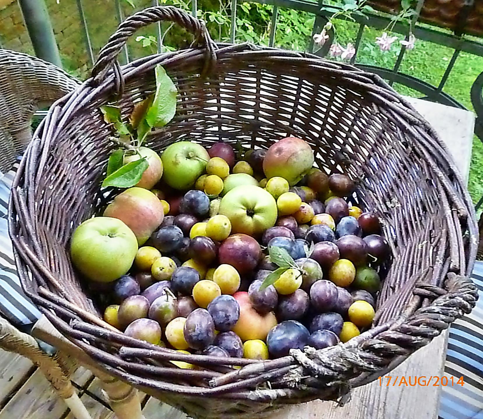 Obst vom Wegesrand-17.8.14   (21)