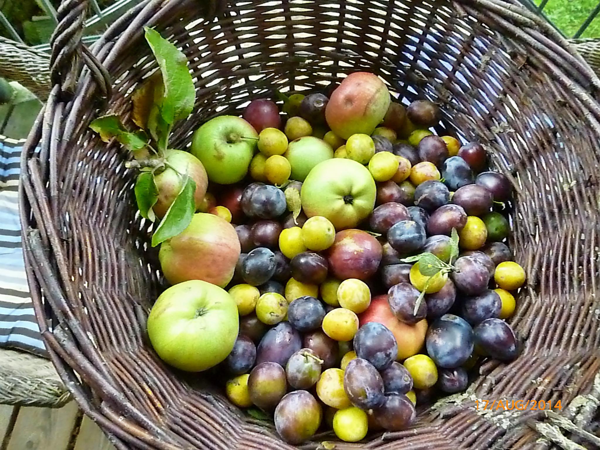 Obst vom Wegesrand-17.8.14   (22)