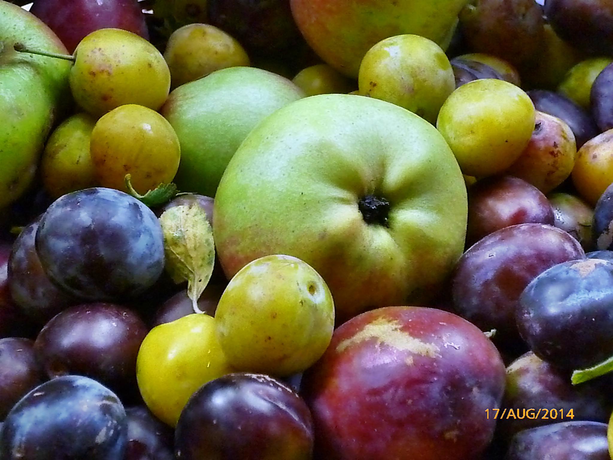 Obst vom Wegesrand-17.8.14   (23)