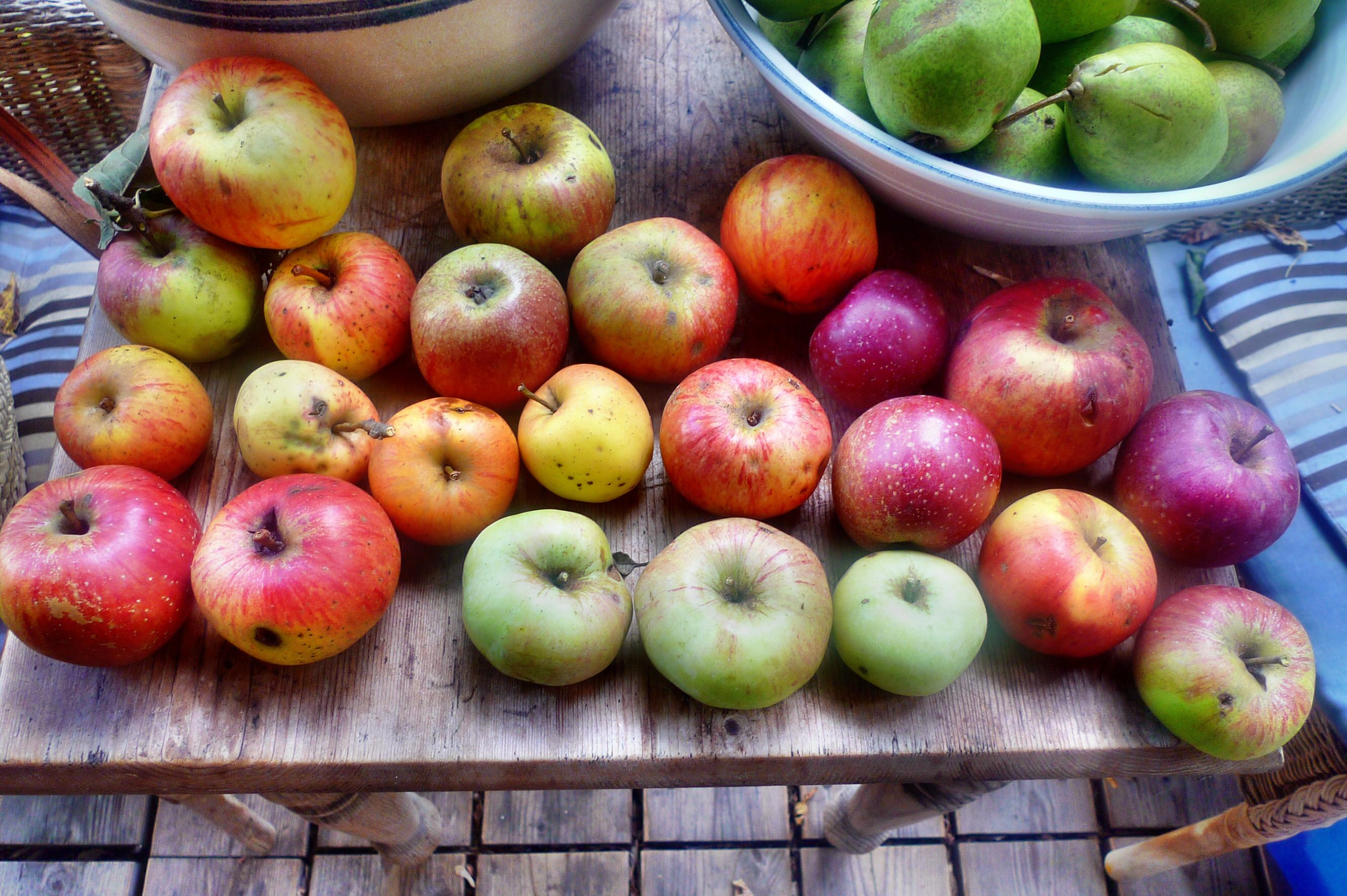 Äpfel- 27.9.14 - (1)