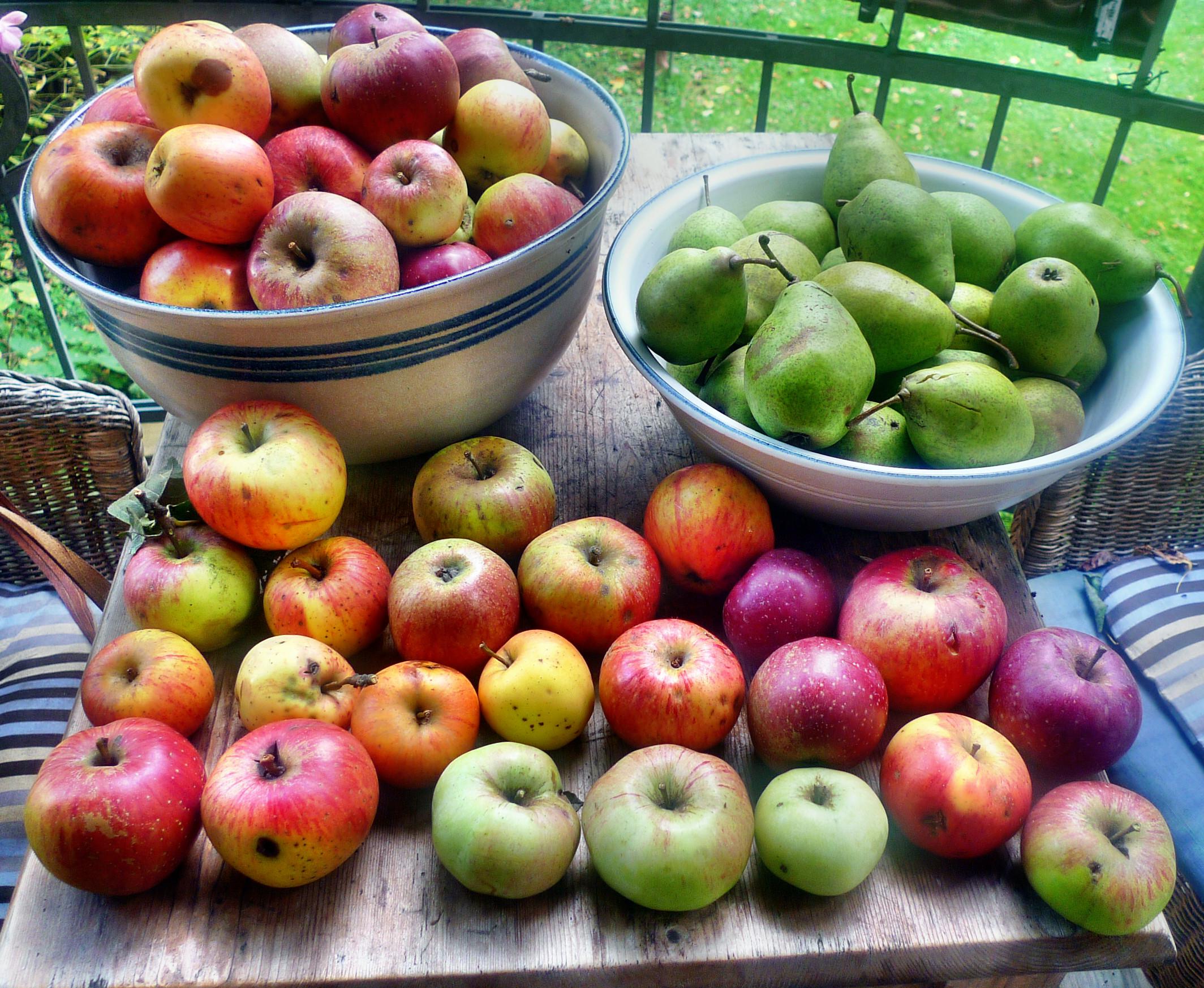 Äpfel- 27.9.14 - (2)
