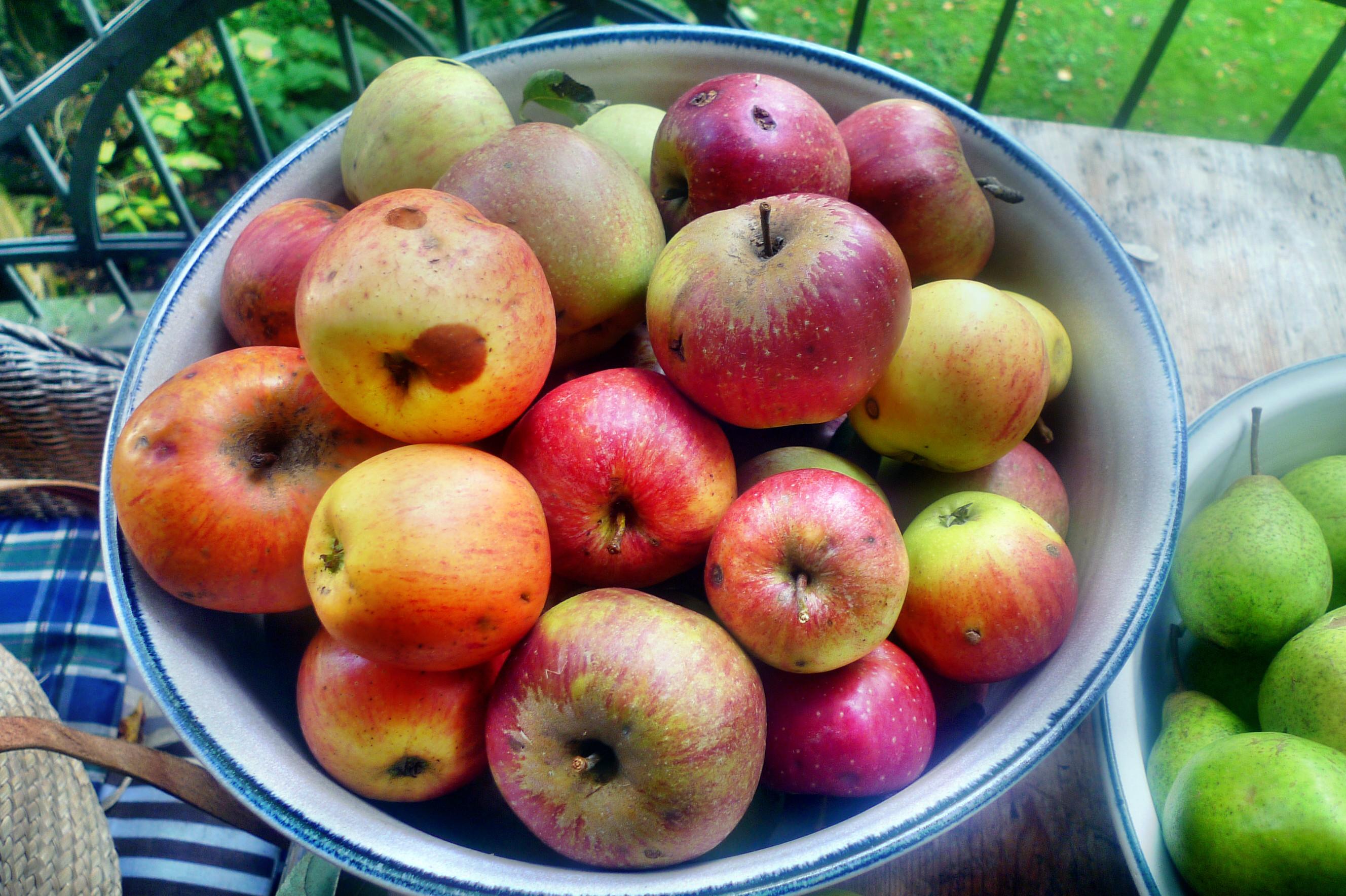 Äpfel- 27.9.14 - (4)