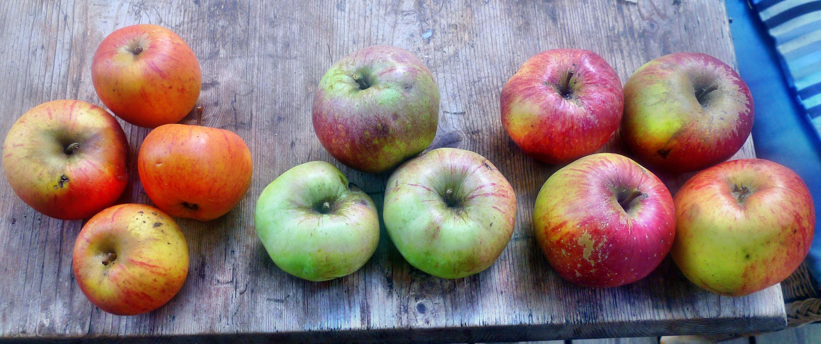Äpfel- 27.9.14 - (5)