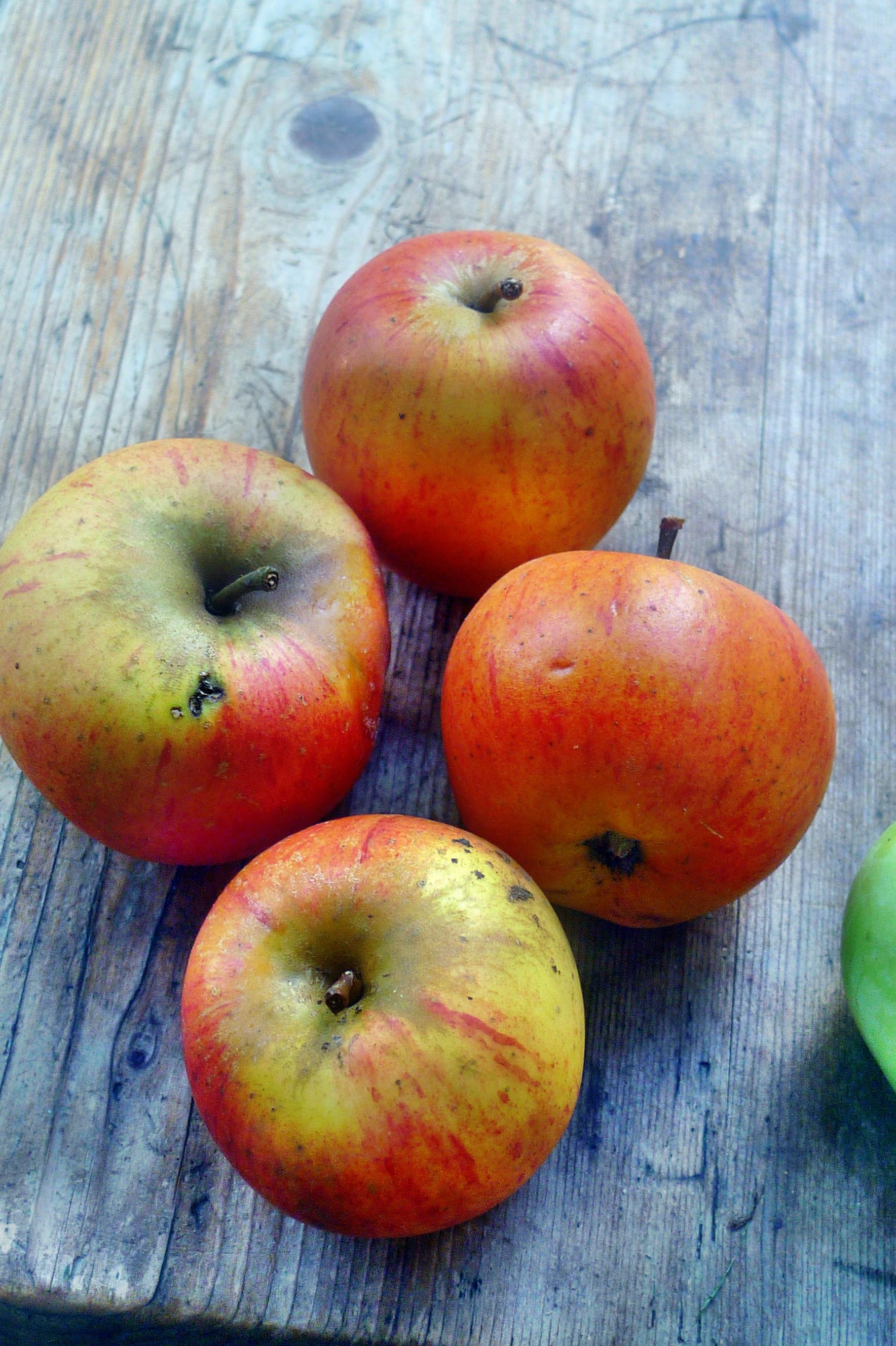 Äpfel- 27.9.14 - (6)