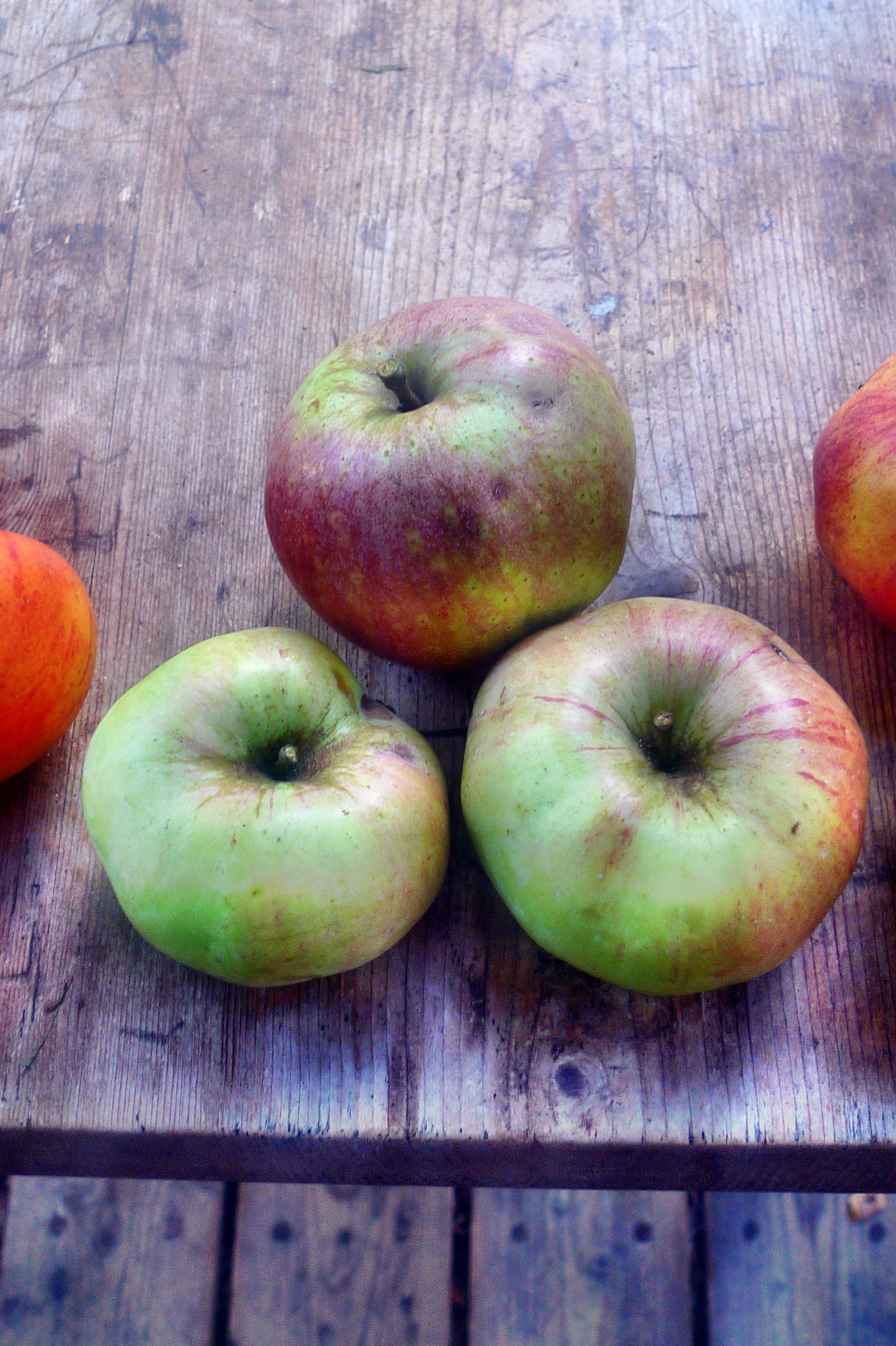 Äpfel- 27.9.14 - (7)