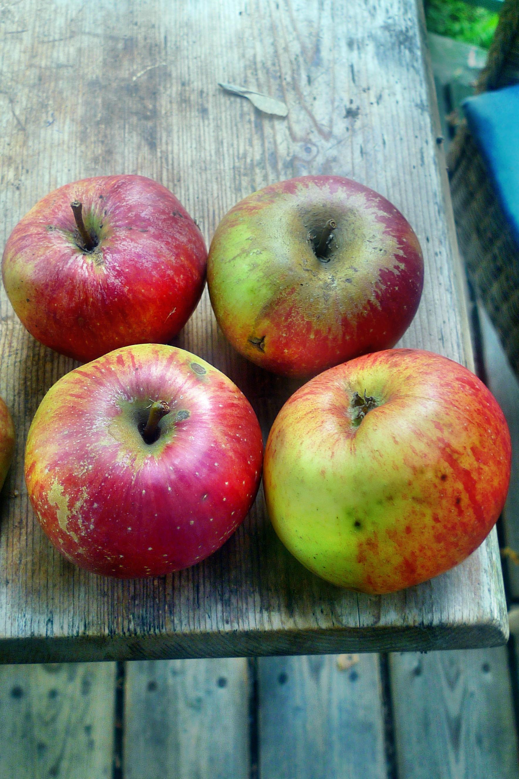 Äpfel- 27.9.14 - (8)