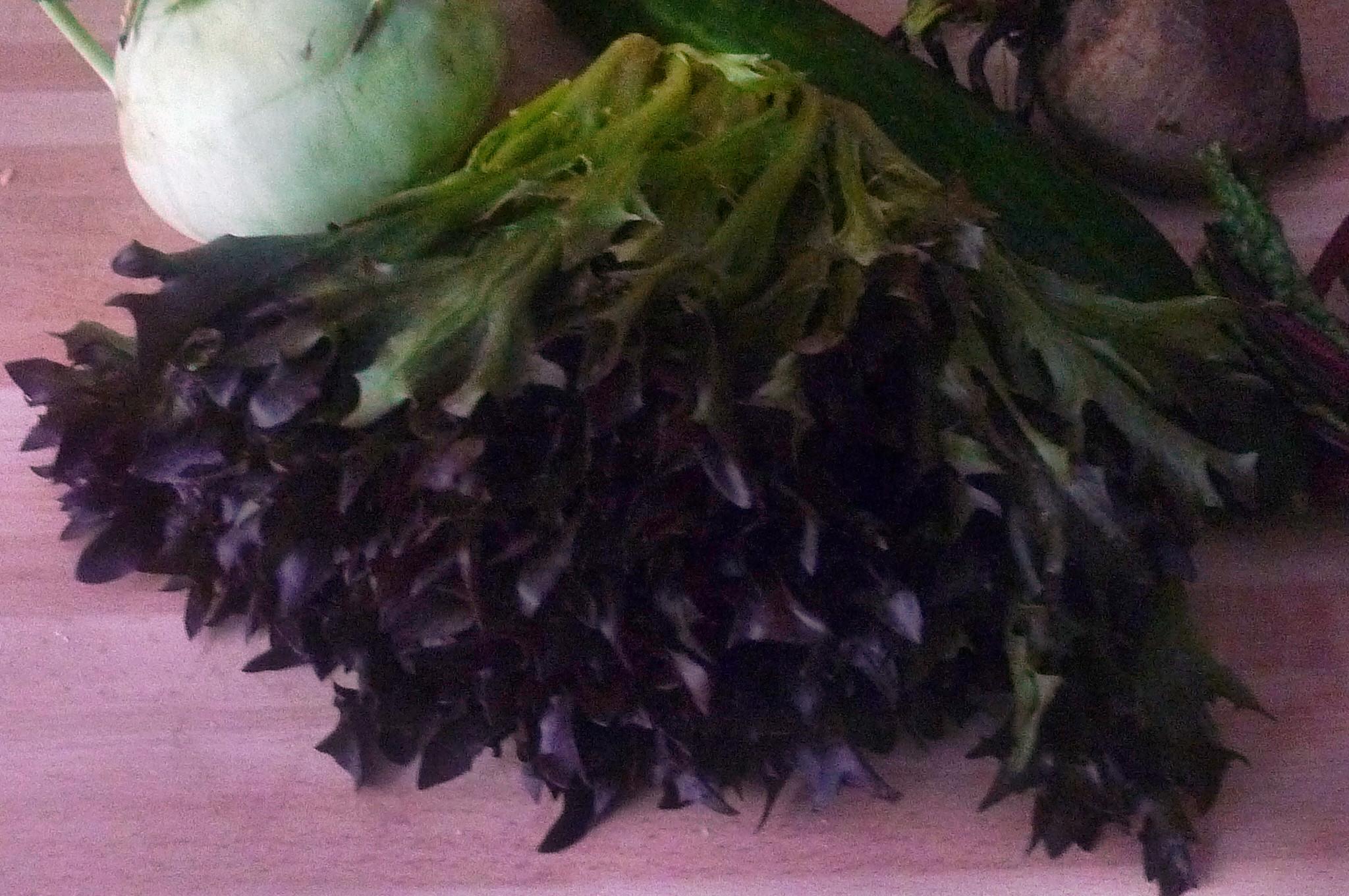 Scholle,Kartoffeln,Salate - 17.9.14   (2)
