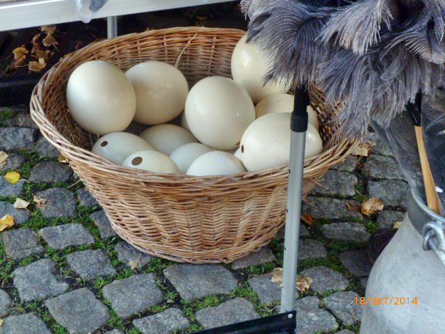 Apfelmarkt -18.10.14   (86)