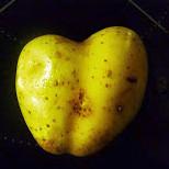 Seelachs,Salate,Kartoffeln -29.10.14   (1)