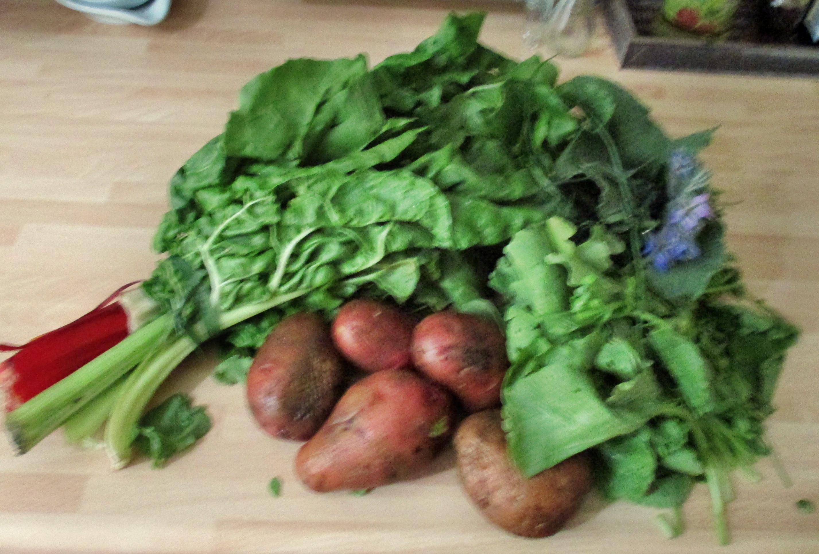 Mangold,Kräuterdip,Kartoffelstampf -27.6.15   (1)