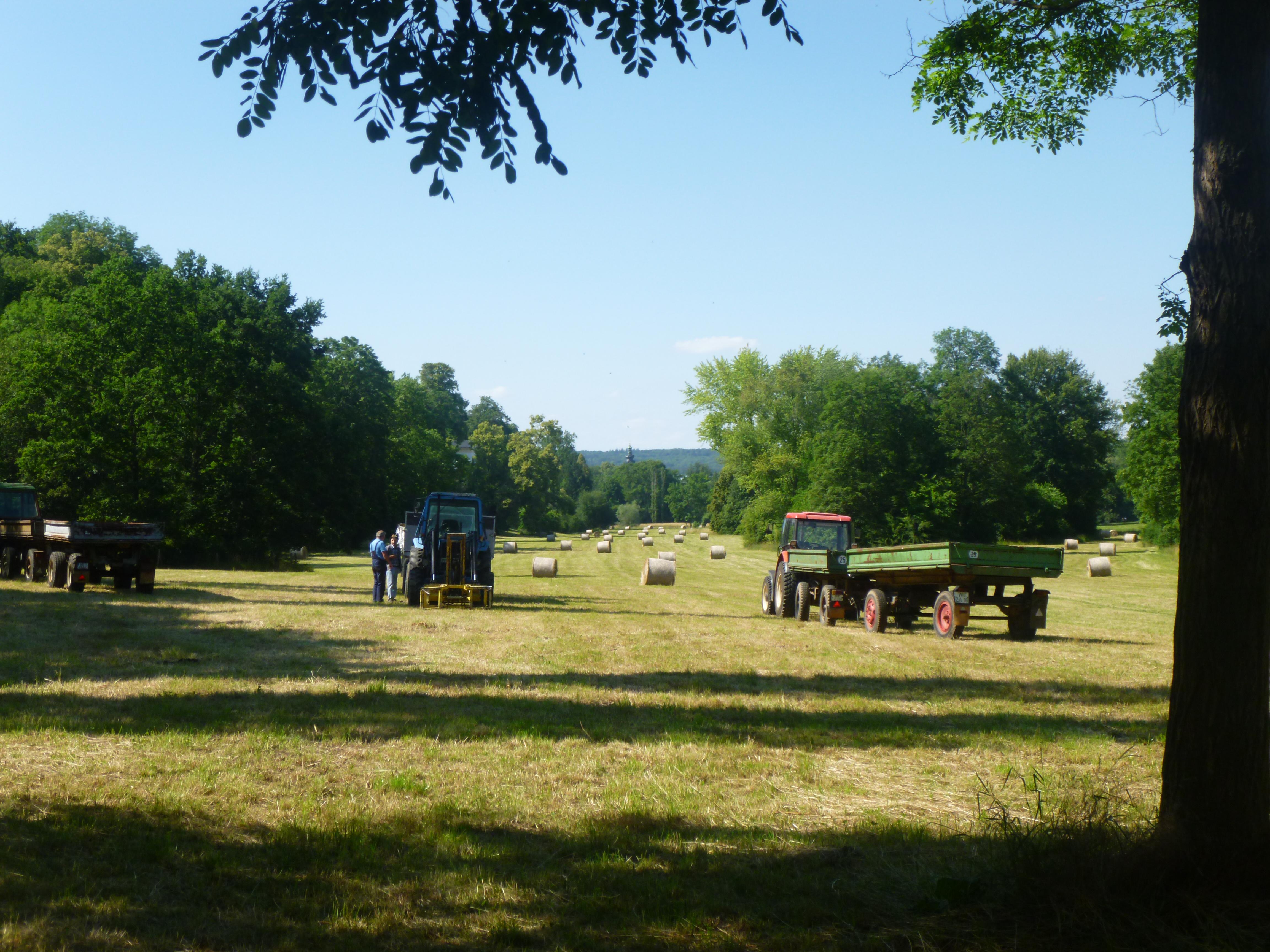 Goethepark - 6.7.15   (11)