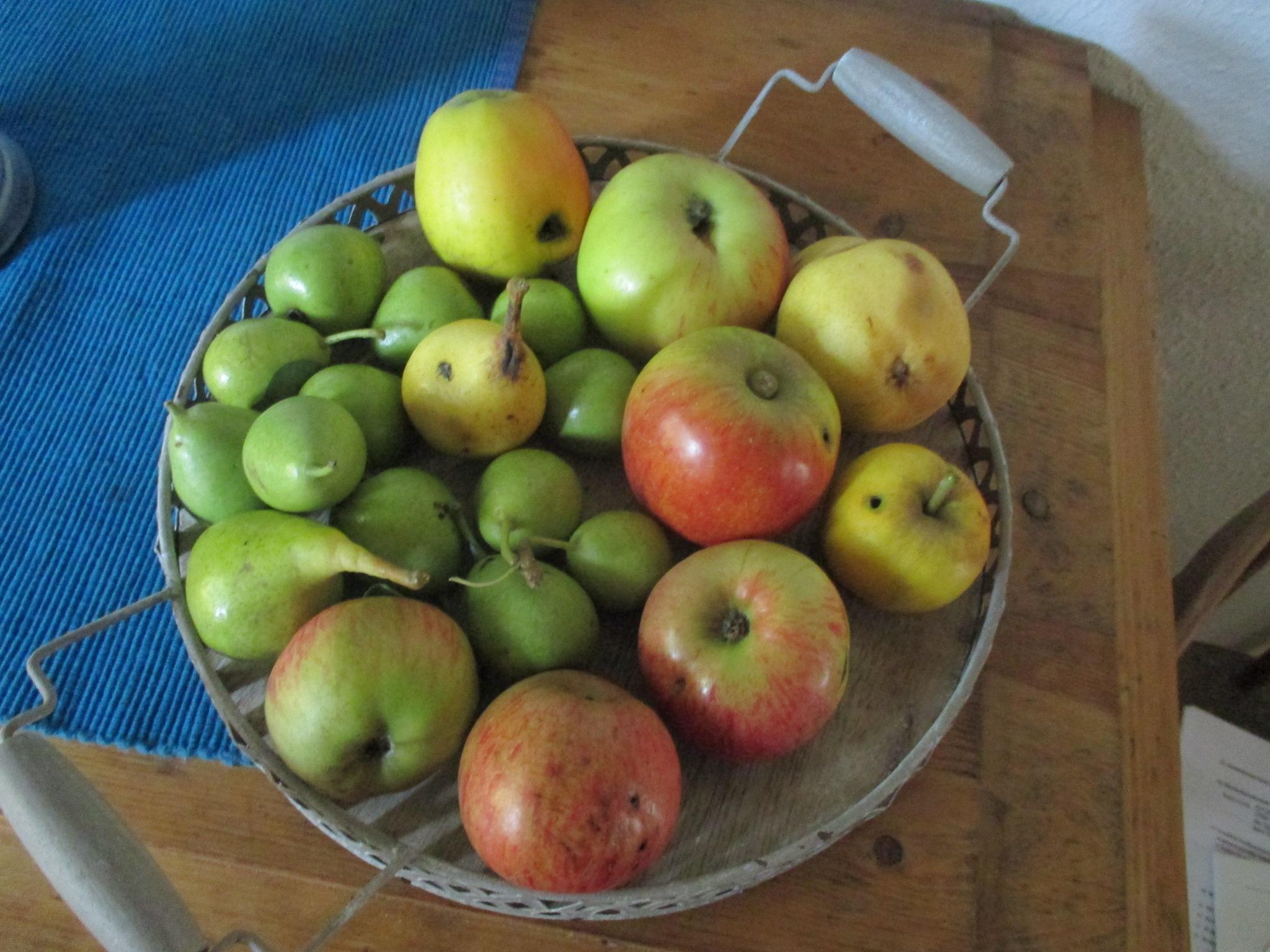 Obst am Wgwesrand -22.8.15   (9)