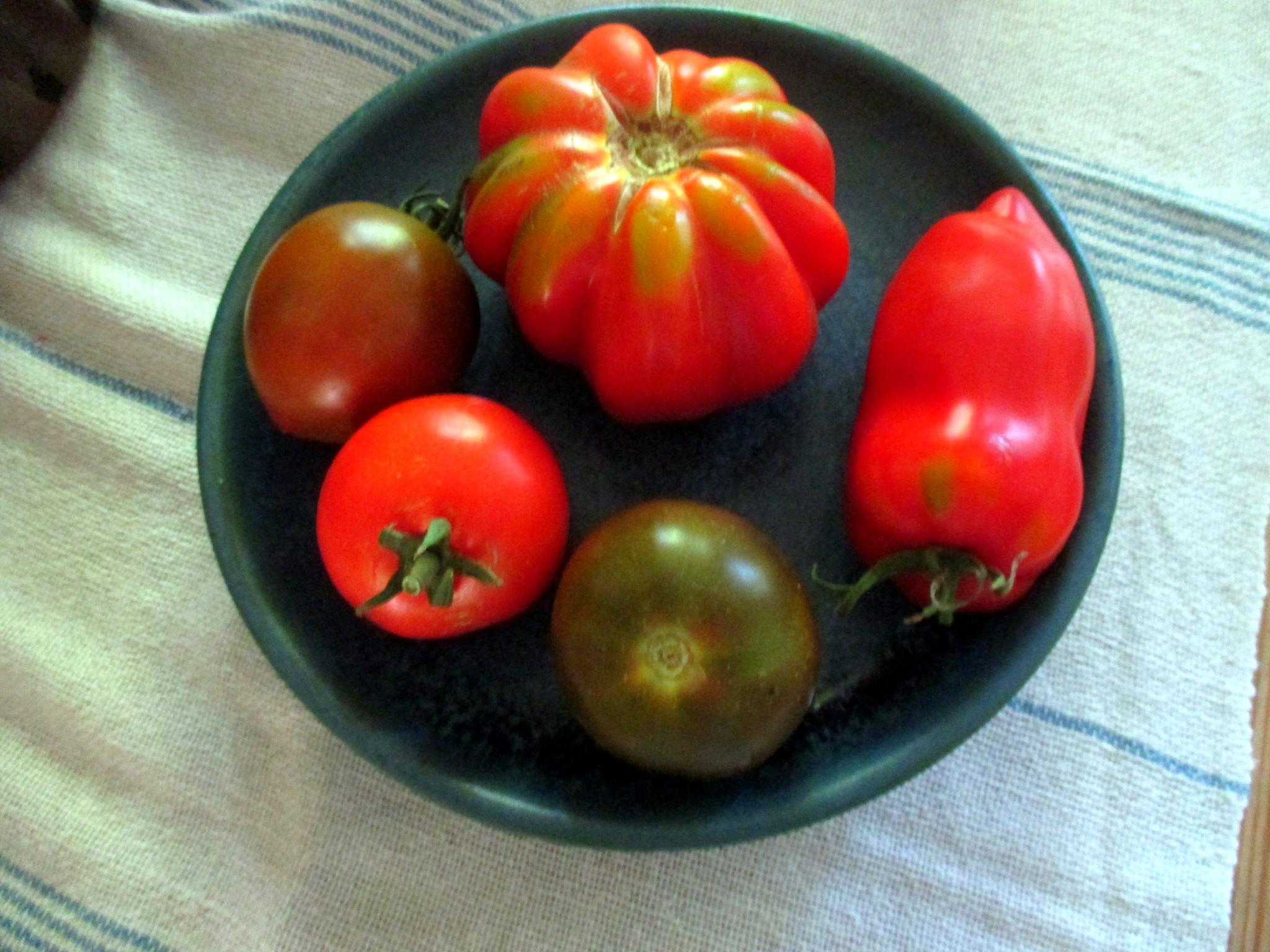 Reineclauden,Tomaten - 15.8.15   (4)