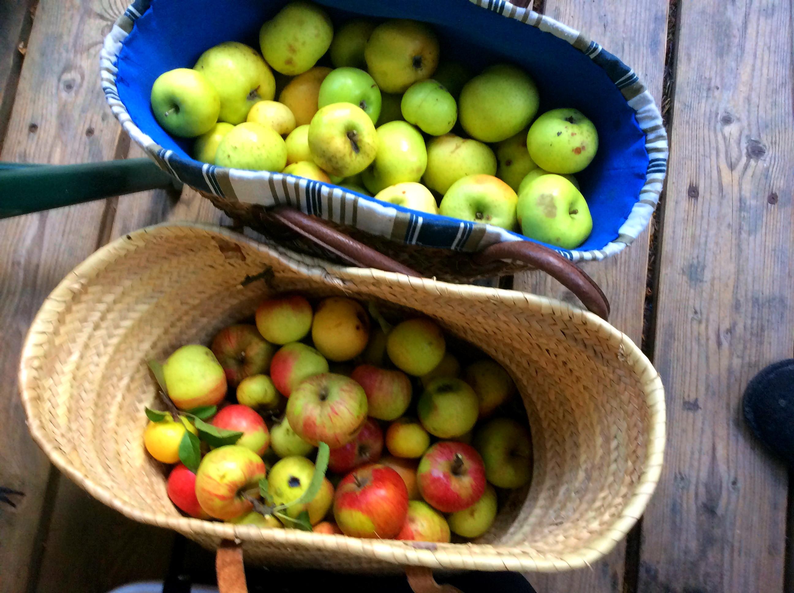Äpfel,Birnen - 27.9.15   (1a)