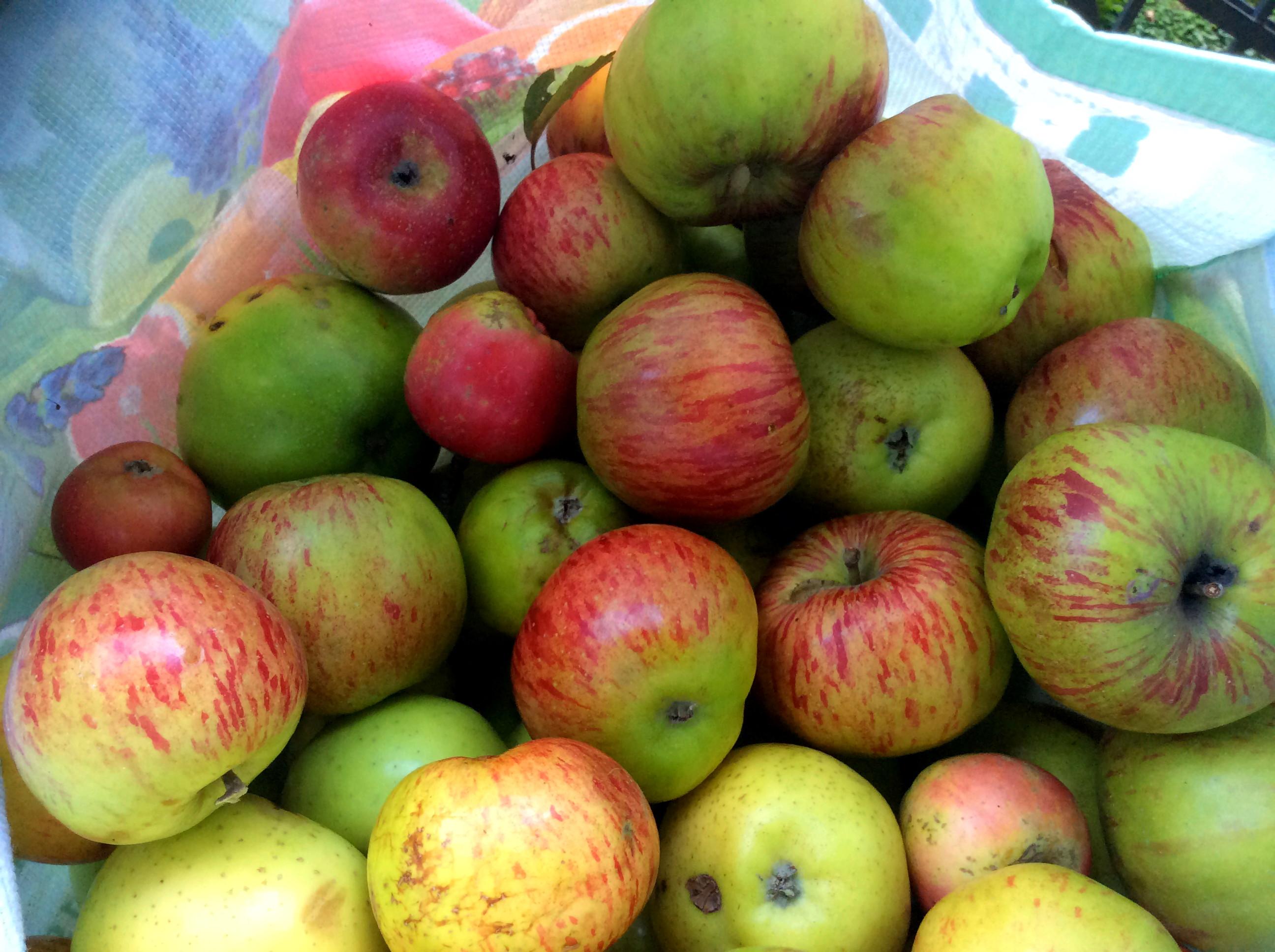 Äpfel,Birnen - 27.9.15   (2)