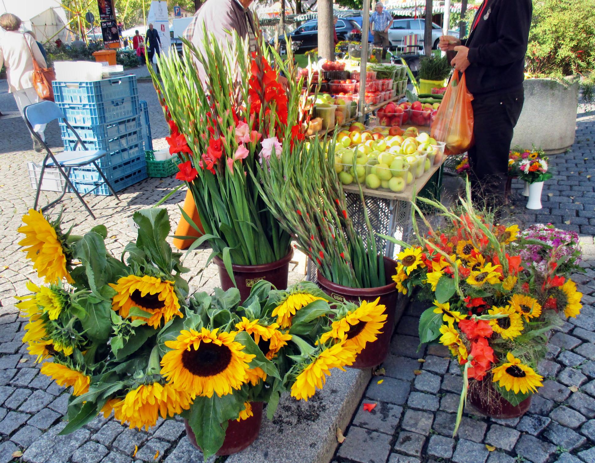 Markt - Jena -12.9 (8)
