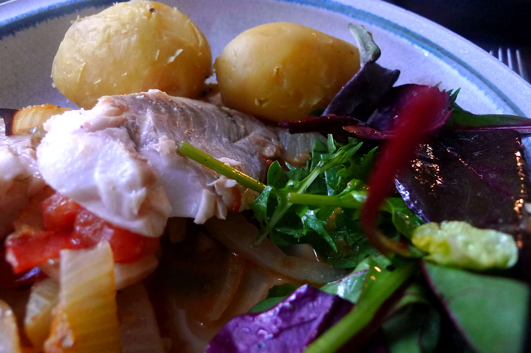 8.2.16 - Rotbarsch,Fenchel,Kartoffel,Salat,pescetarisch (2)