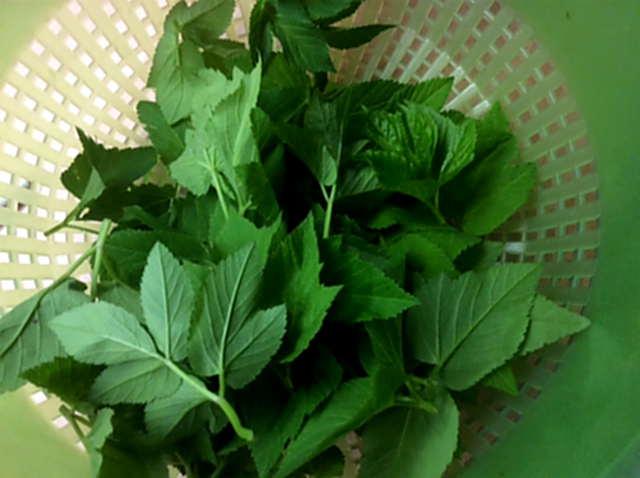 24.4.16 - Gierschgemüse,Ravioli,Bärlauchpesto,Rhabarberkompott,vegetarisch (3)
