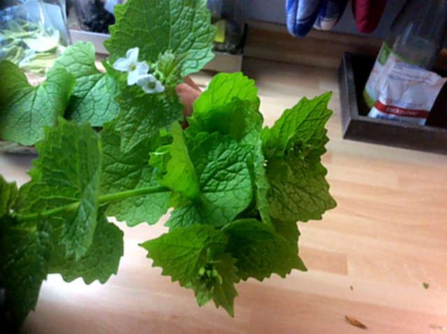 3.5.16 - Grüne Nudeln,Bärlauchpesto,Wildkräutersalat  (4)