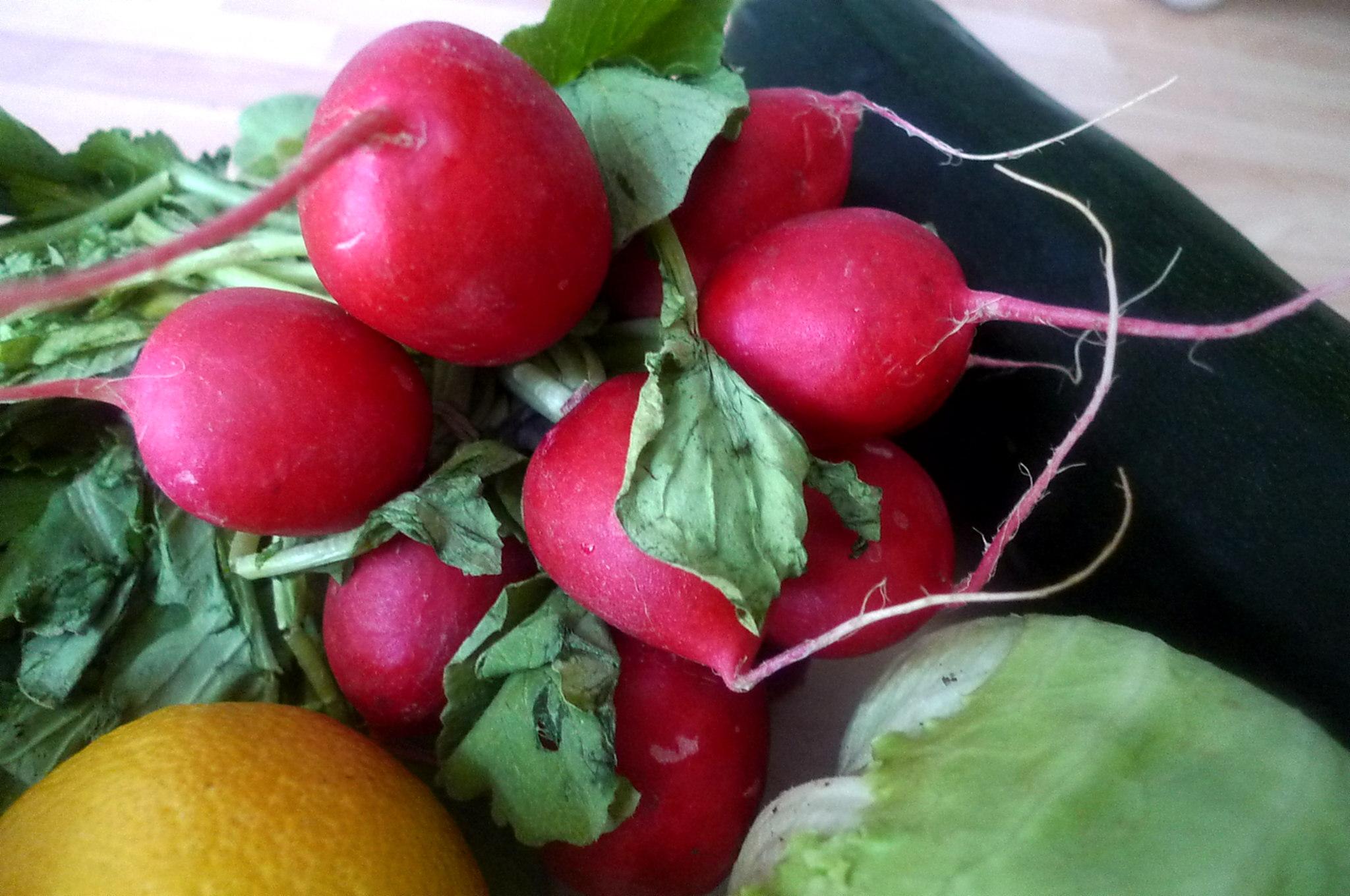 10.7.16 -. Salat,Zucchini,Dip,vegetarisch (3)