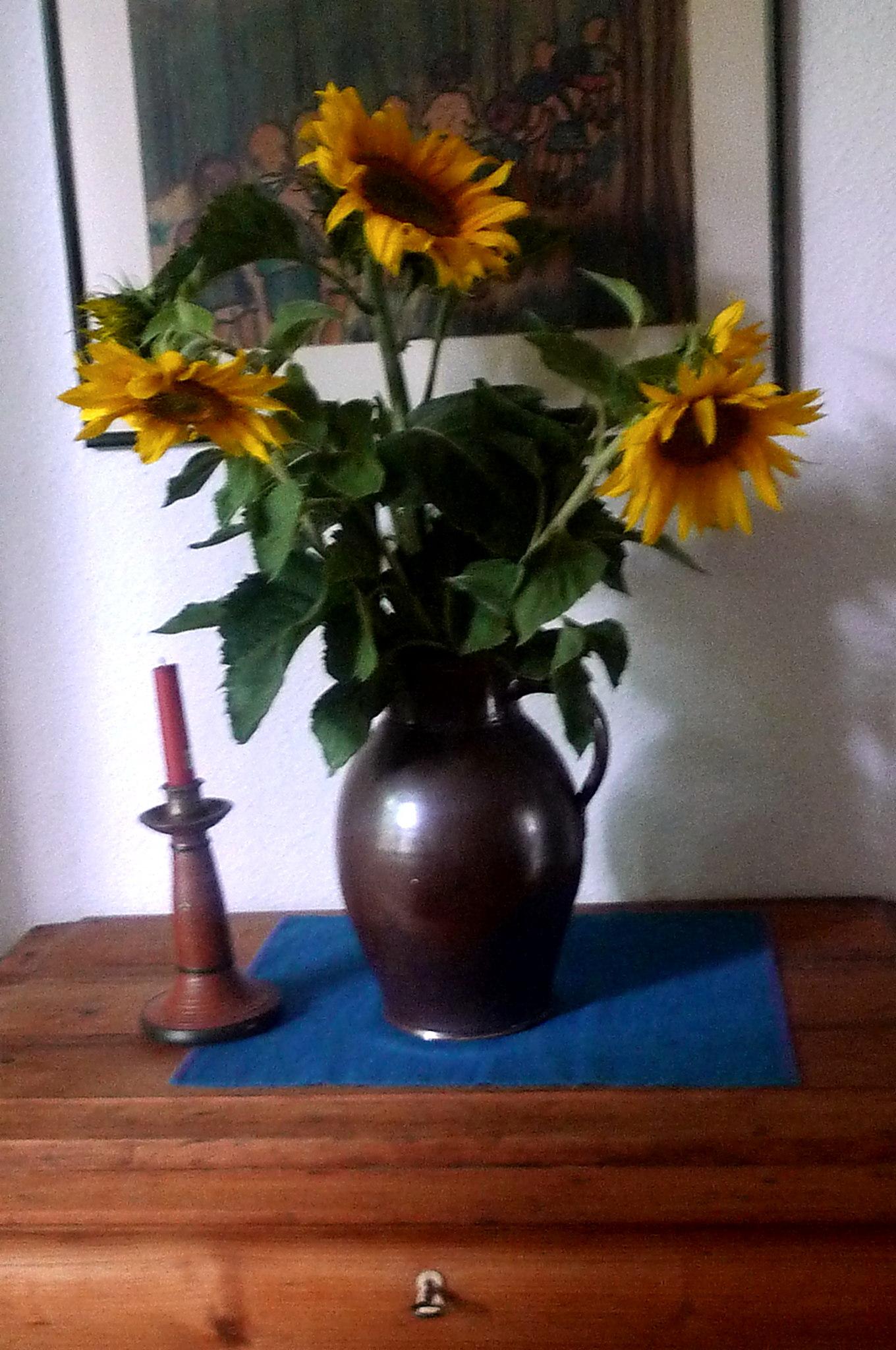 16.7.16 - Kirschernte und Sonnenblumen vom Feld (14)