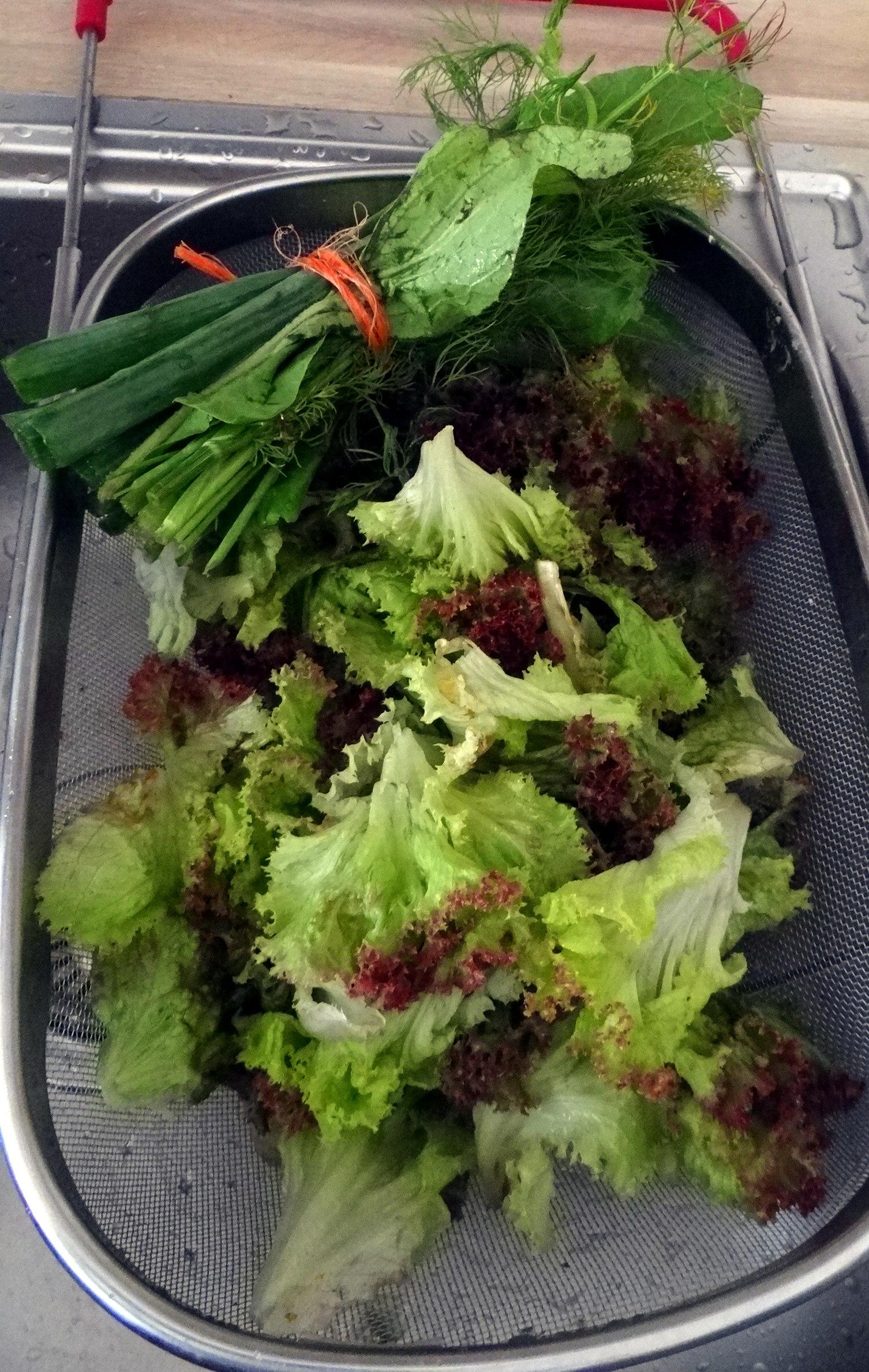 Zitronenrisotto mit Wildkräutern,Gurkensalat,Lollo Rosso,vegetarisch (14)