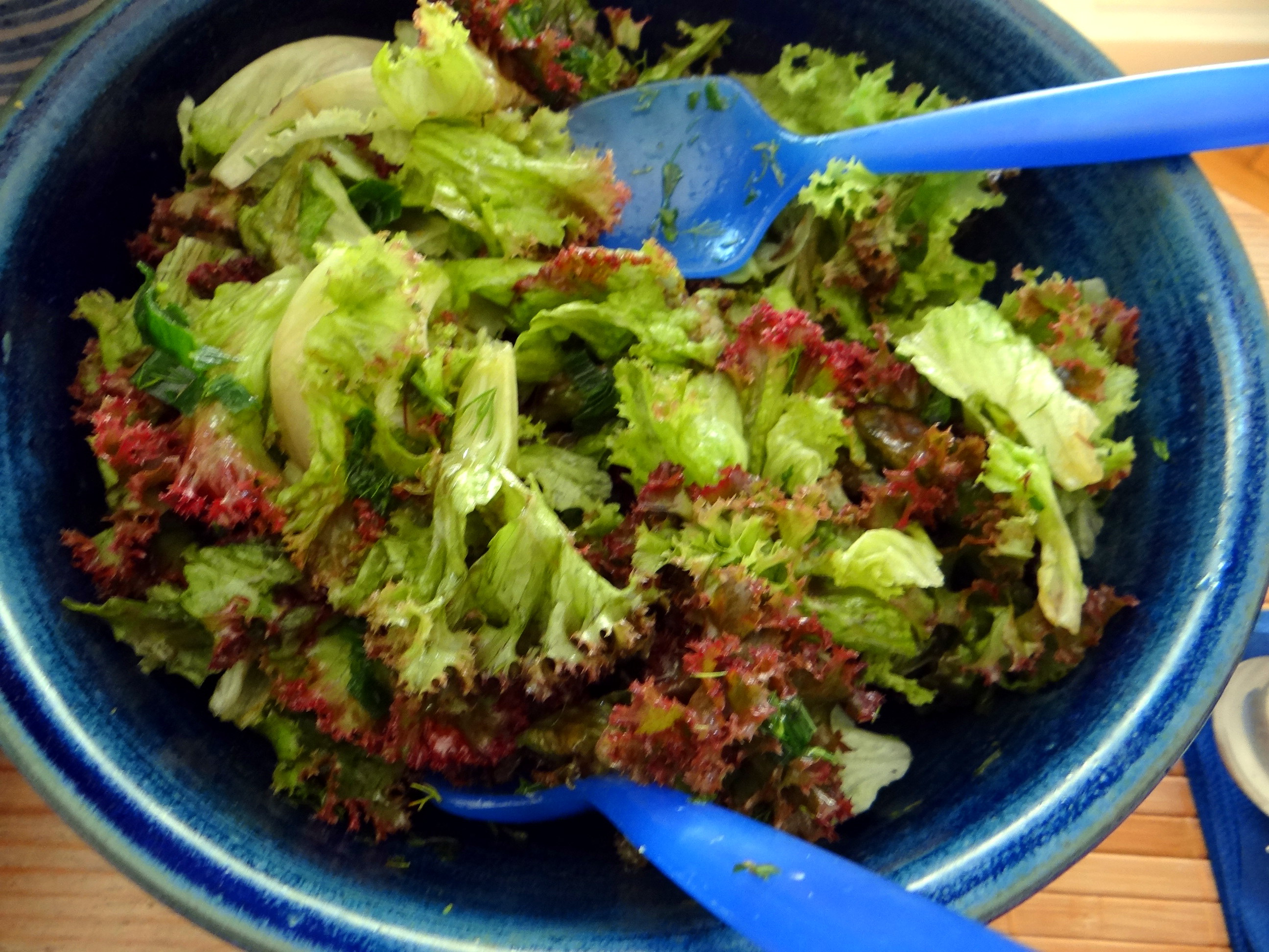 Zitronenrisotto mit Wildkräutern,Gurkensalat,Lollo Rosso,vegetarisch (30)