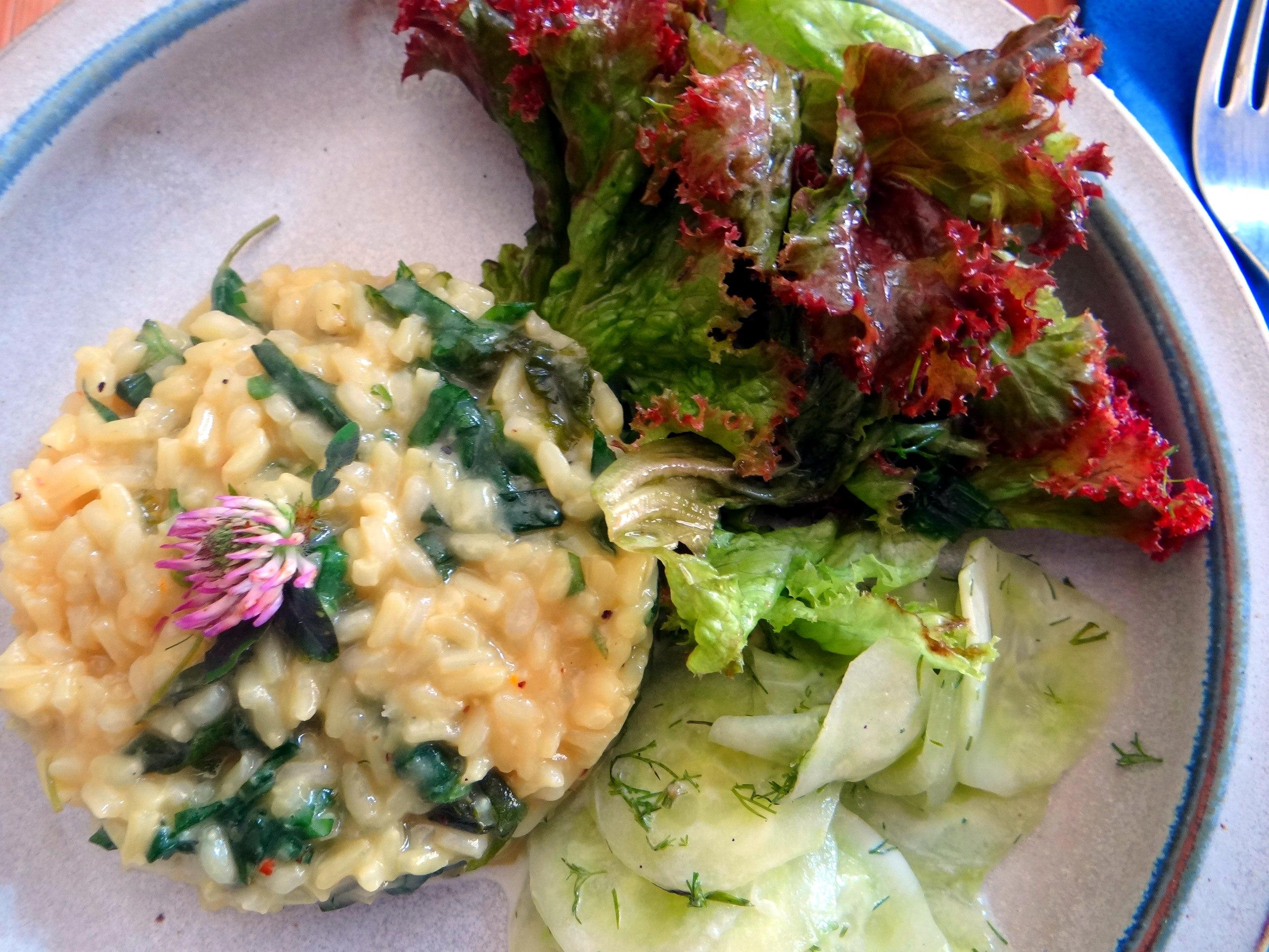 Zitronenrisotto mit Wildkräutern,Gurkensalat,Lollo Rosso,vegetarisch (32)