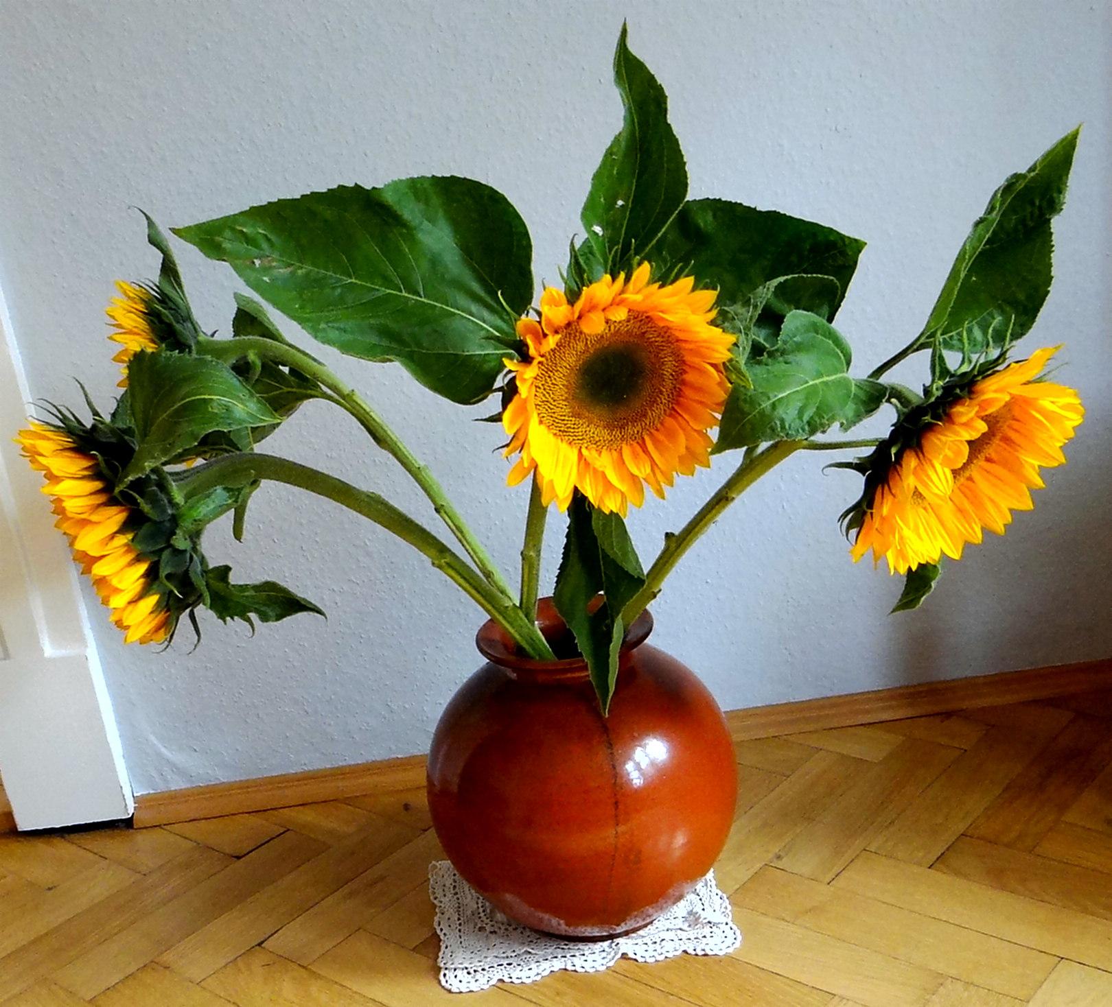 Bohnen Eintopf,Obstteller (1)
