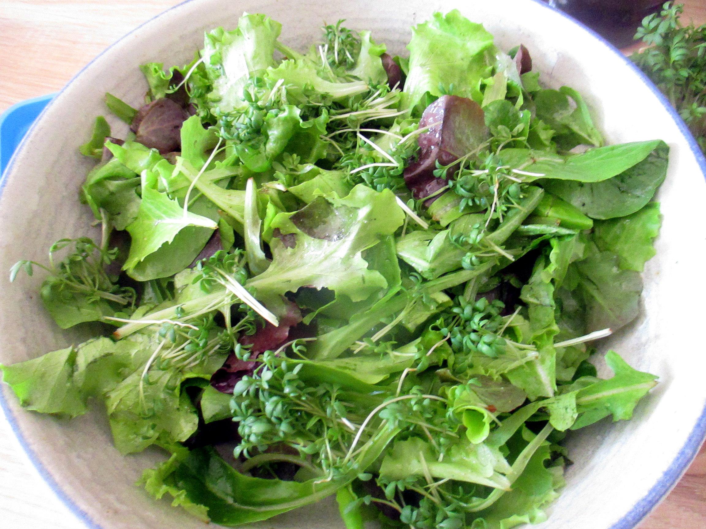 Rigatone,Gorgonzolasauce,Salate (10)