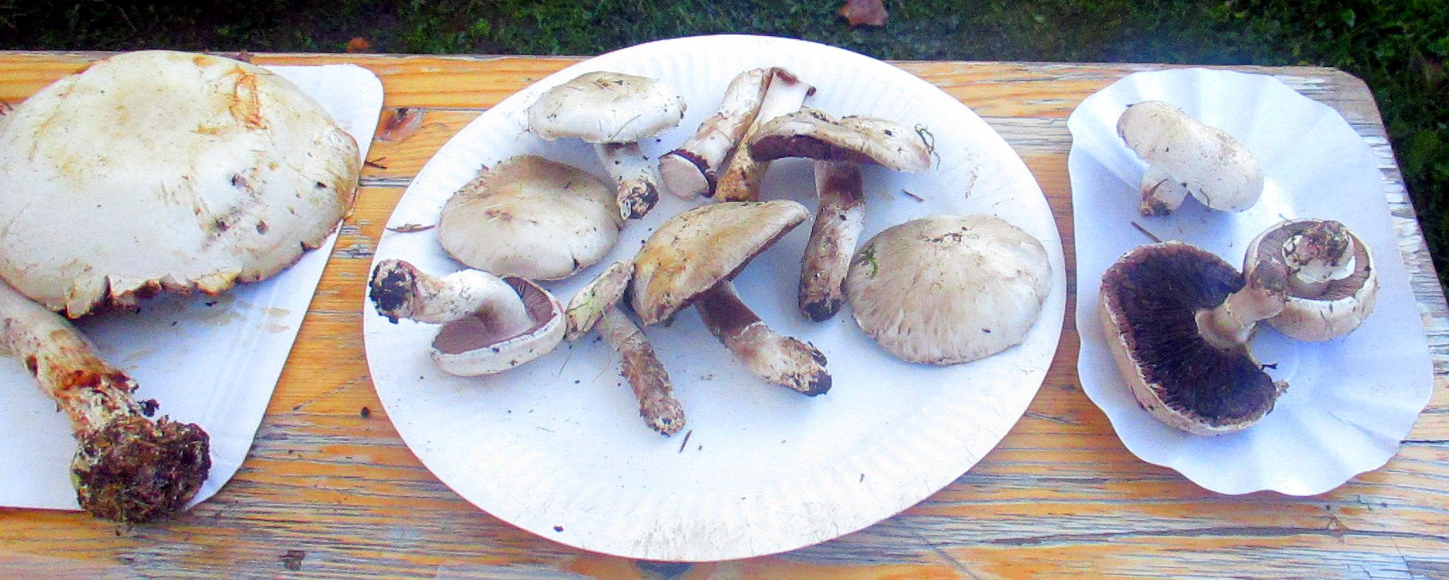 Pilze (3)