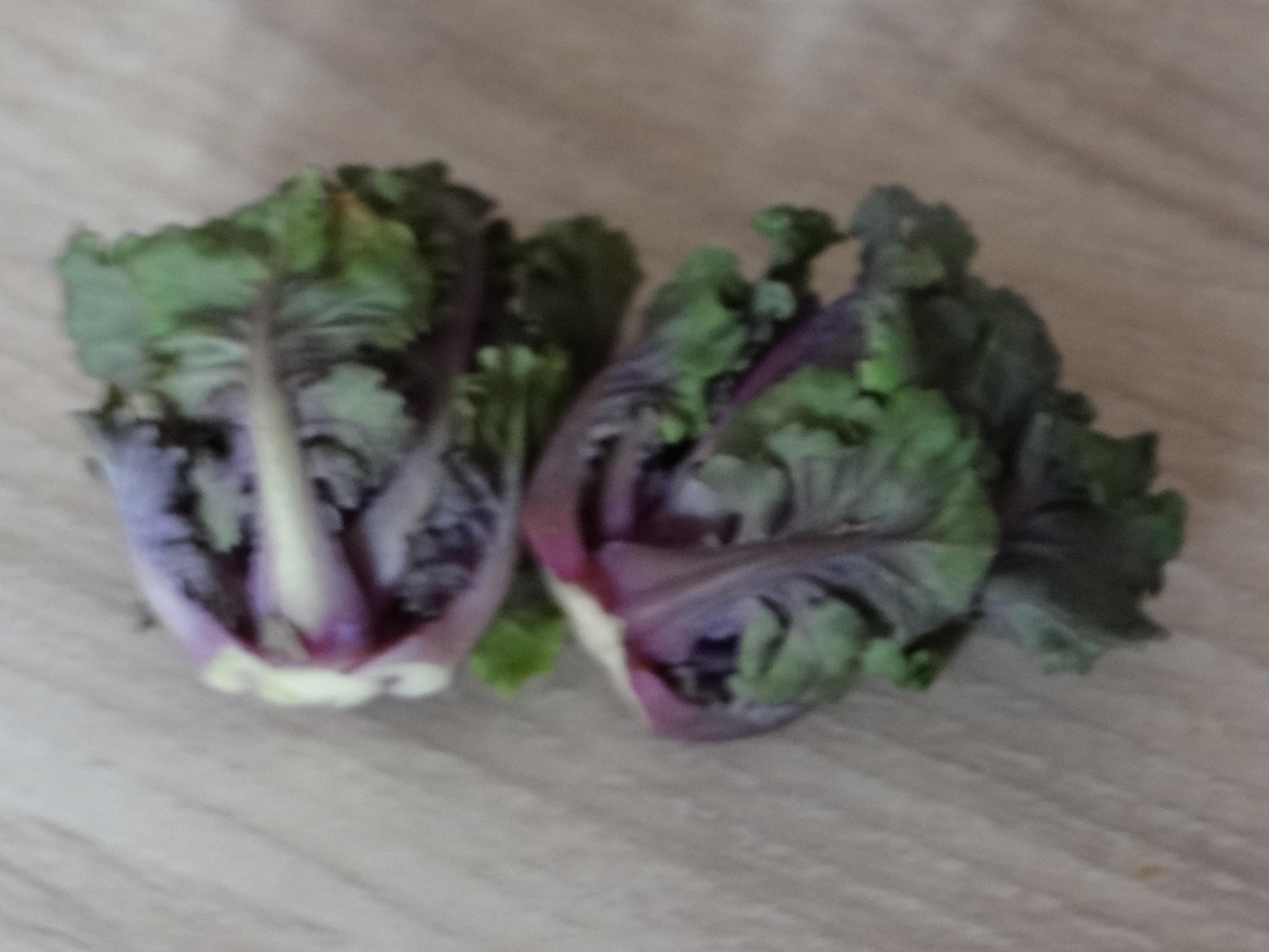 Rotbarsch,Kohlröschen,violette Kartoffeln (9)