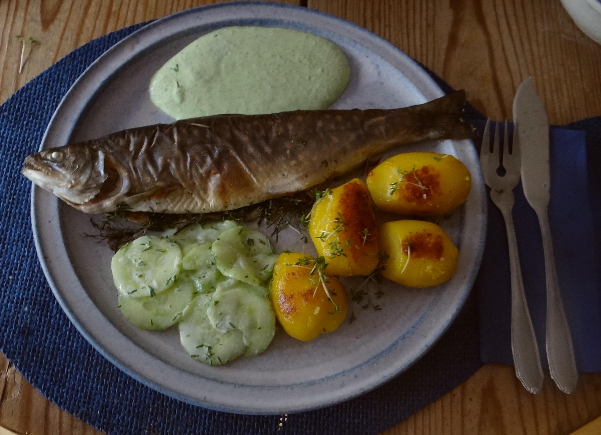 Saibling,Dillsoße,Kartoffeln,Gurkensalat (13)