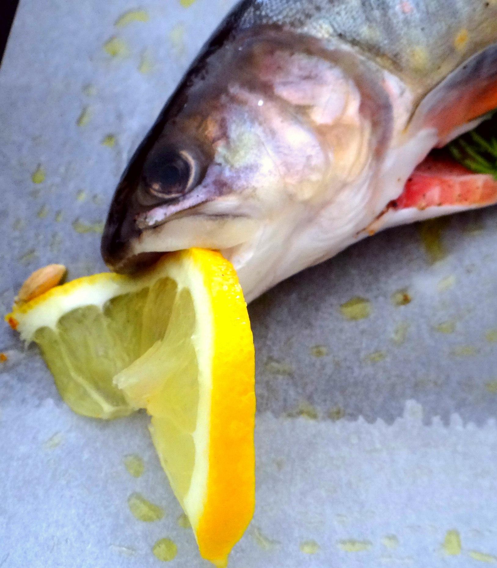 Saibling,Dillsoße,Kartoffeln,Gurkensalat (7)
