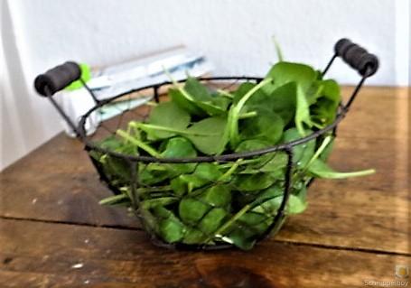 Gemüse,Salat und Ei (14)