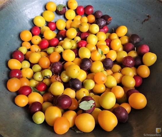 Bohneneintopf,Spillingkompott (14)