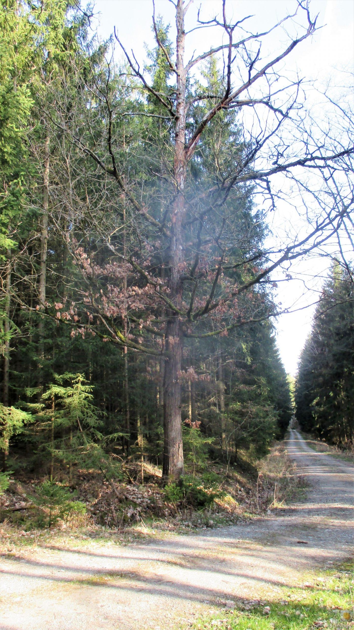 19.03.20 Wald Blankenhain. 1 (1a) (1)