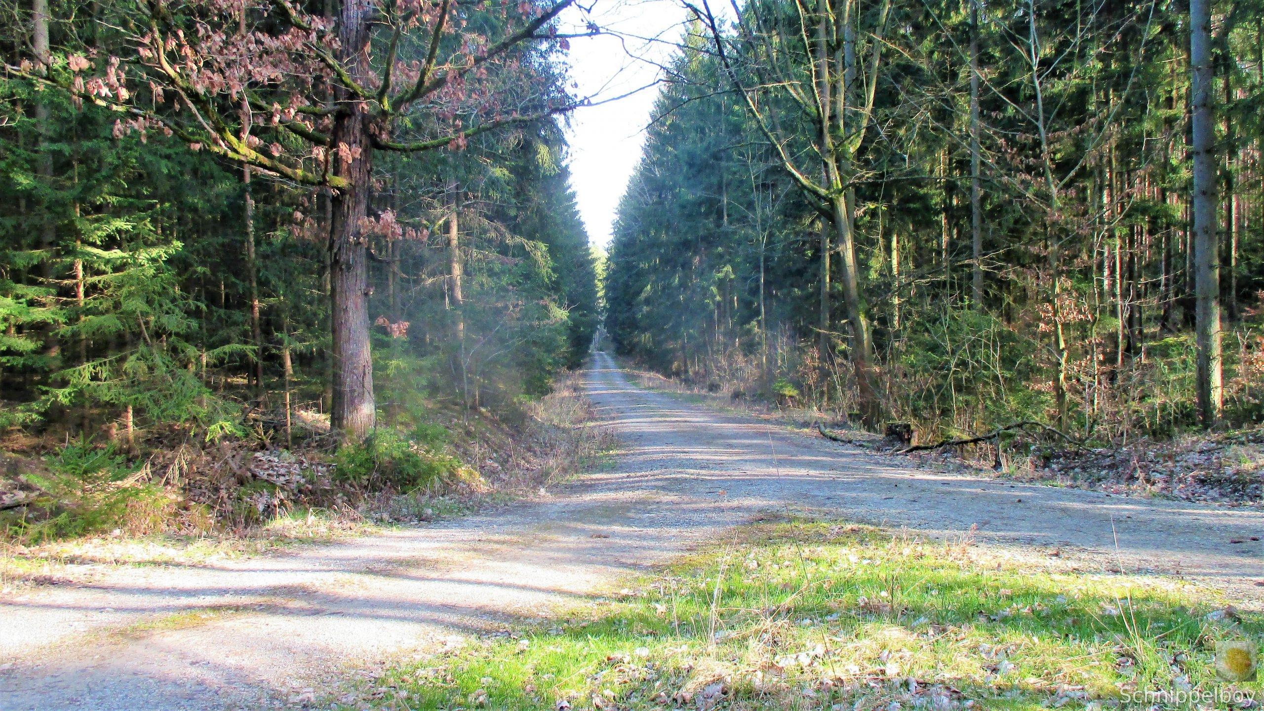 19.03.20 Wald Blankenhain. 1 (1a) (2)