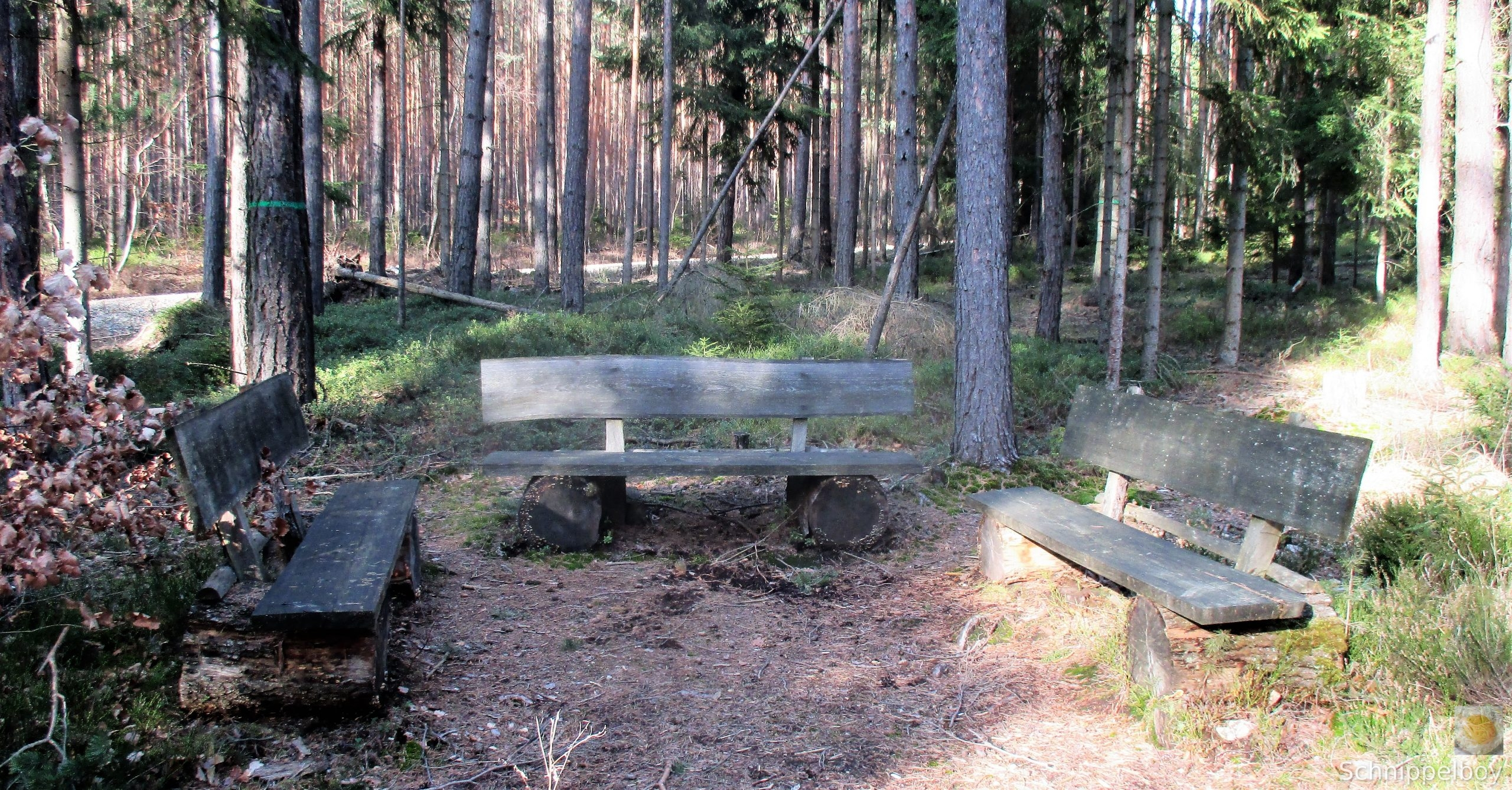 19.03.20 Wald Blankenhain. 1 (2)