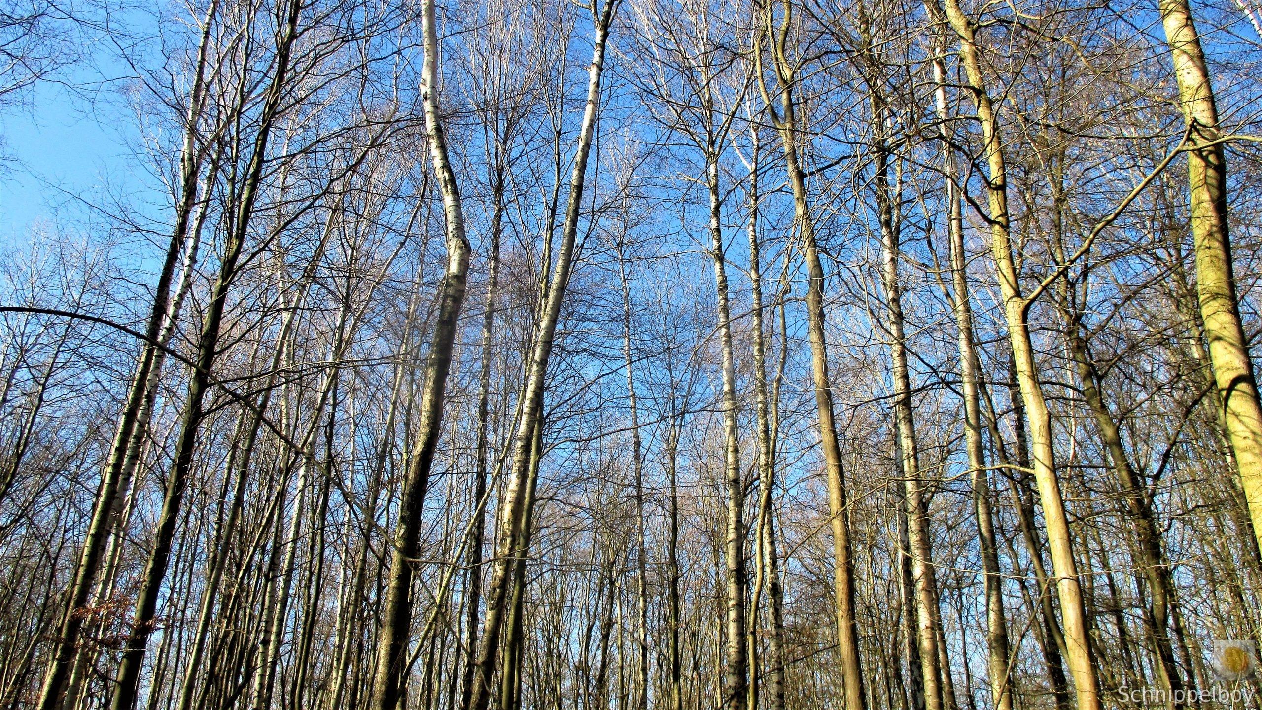 19.03.20 Wald Blankenhain. 1 (3)