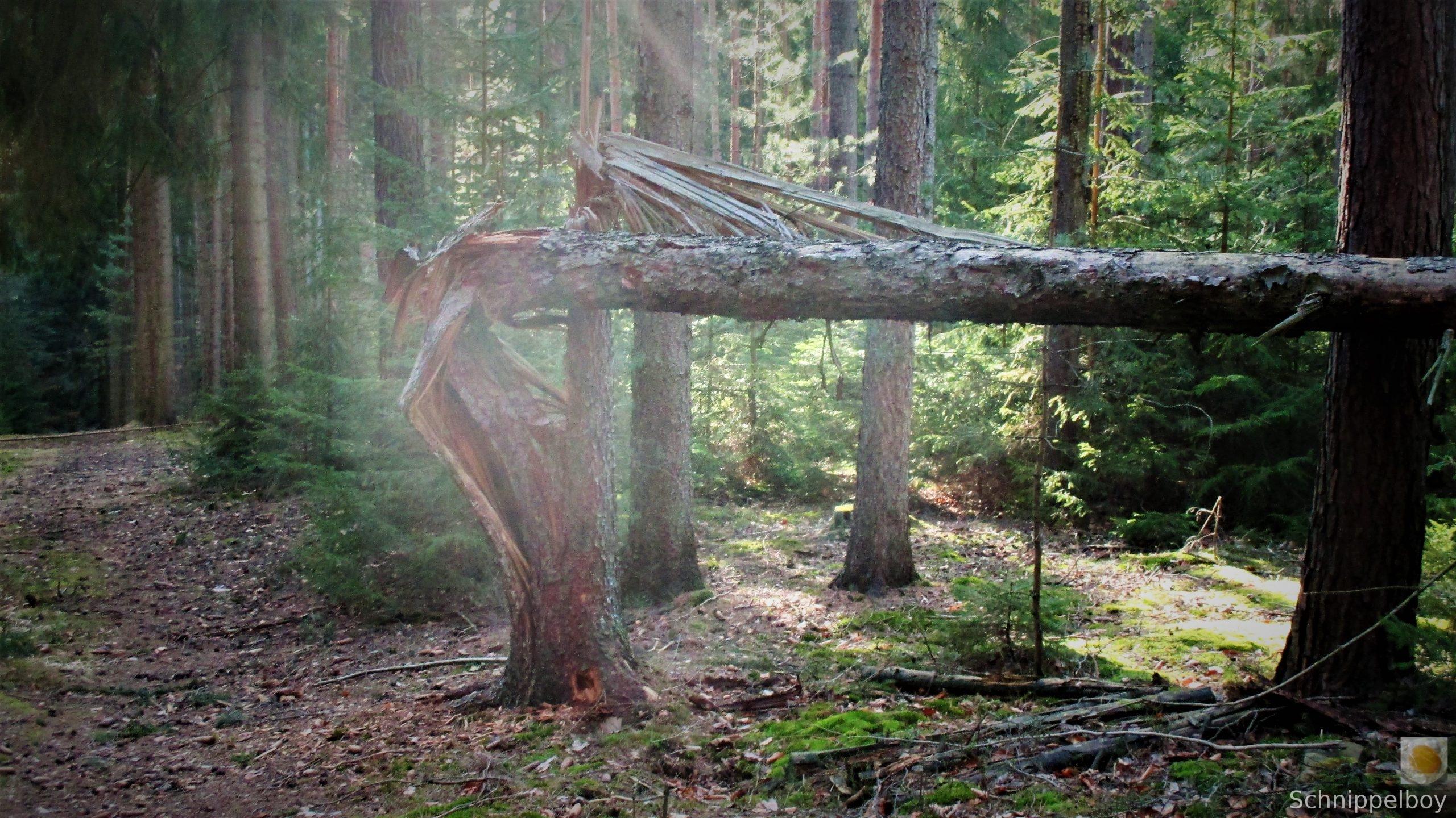 19.03.20 Wald Blankenhain. 1 (3a)
