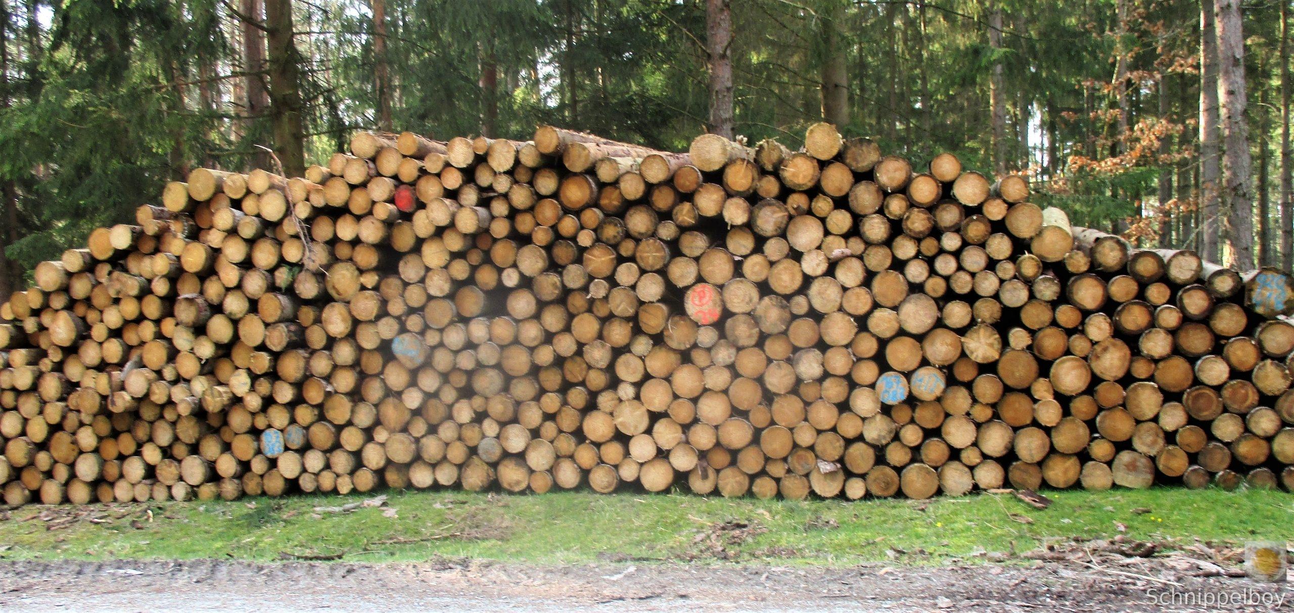 19.03.20 Wald Blankenhain. 1 (4)