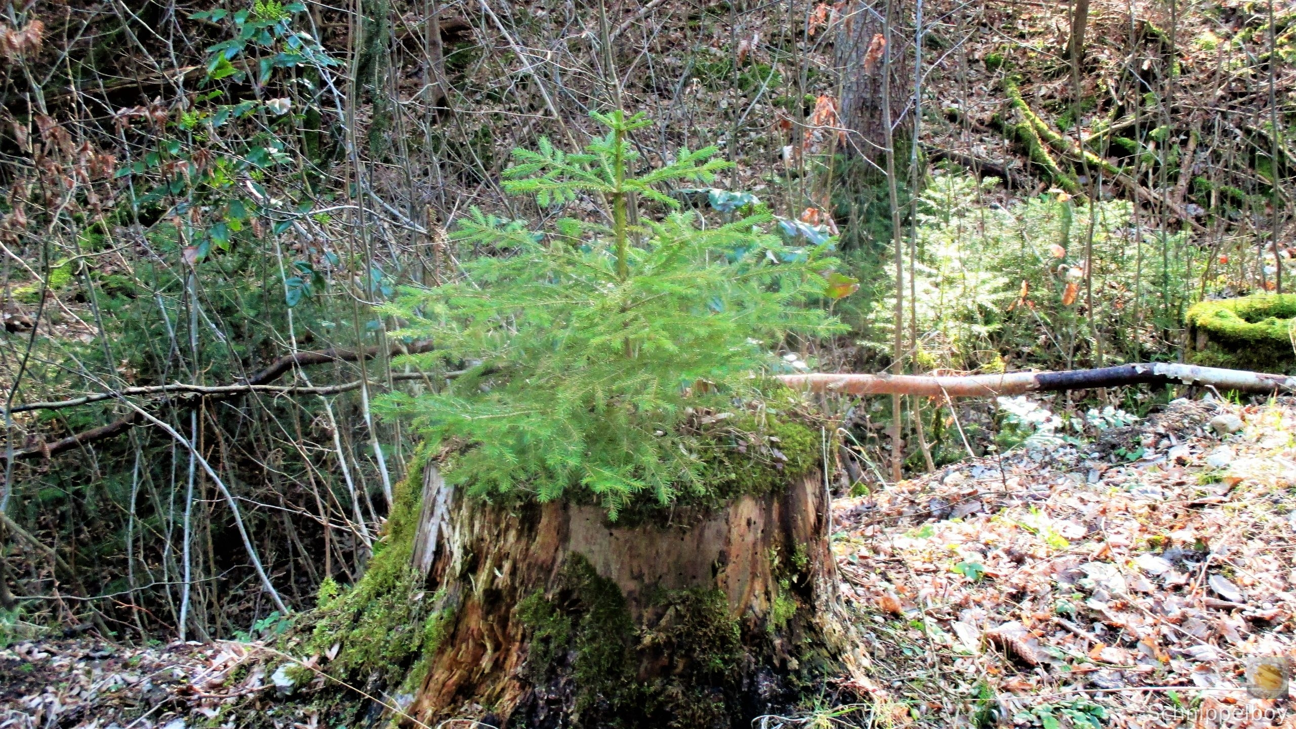 19.03.20 Wald Blankenhain. 1 (5)