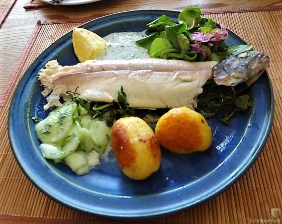 Forelle, Salate und Dip (6)