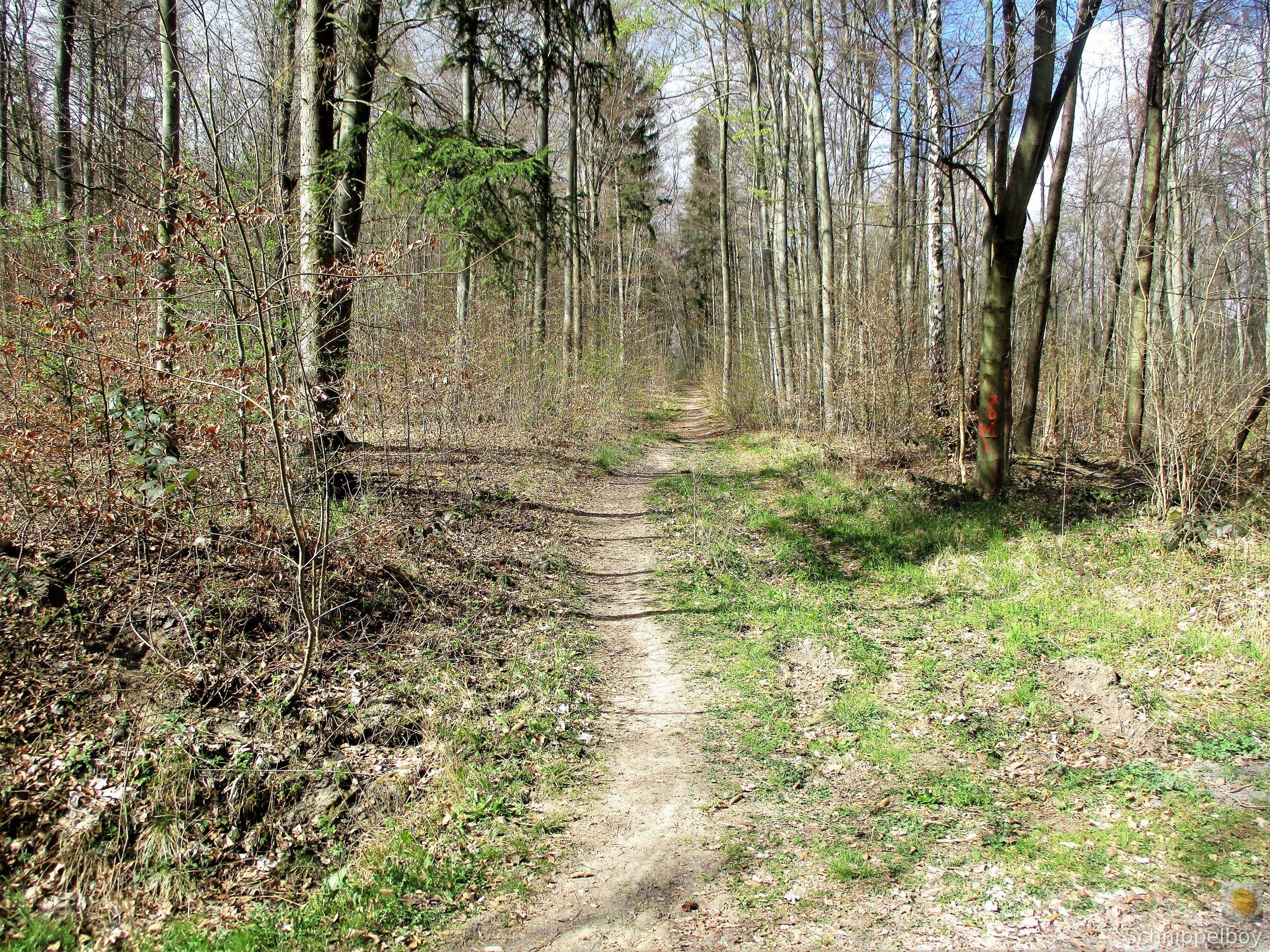 Spaziergang in aller Frühe (9)